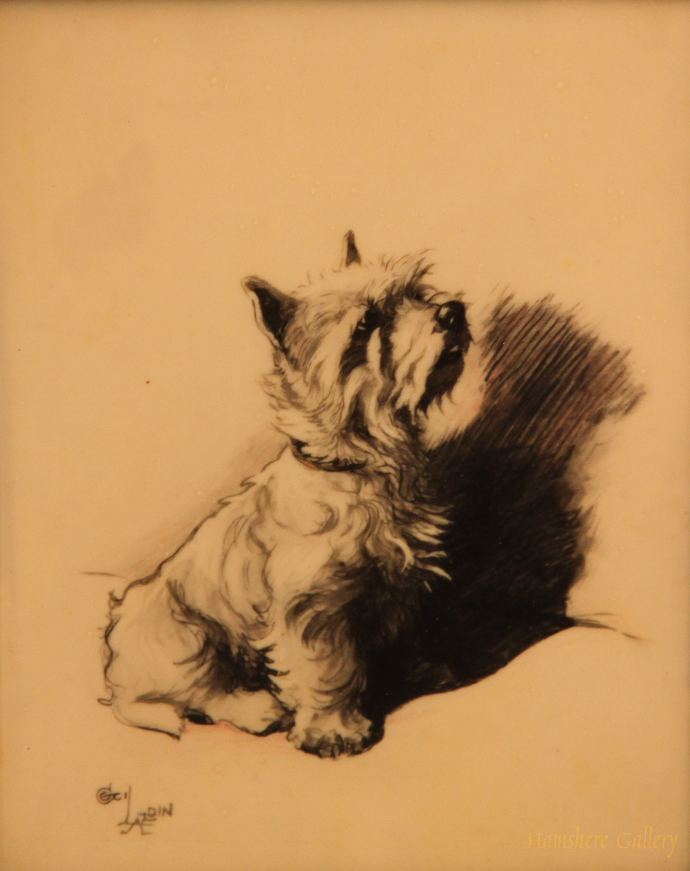 Click to see full size: West Highland Terrier  by Cecil Charles Windsor Aldin