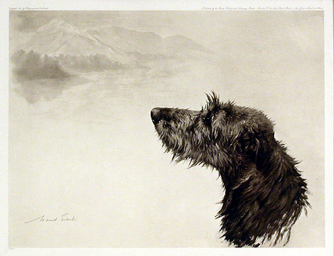 Click to see full size: Scottish Deerhound photogravure by Maud Earl