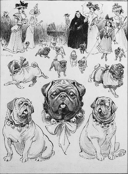 Click to see full size: Pugs by Christopher Gifford Ambler