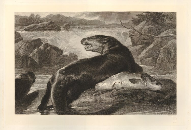 Click for larger image: Otters and Salmon by Charles George Lewis (English, 1808-1880) after Sir Edwin Landseer RA (English, 1802-1873) - Otters and Salmon by Charles George Lewis (English, 1808-1880) after Sir Edwin Landseer RA (English, 1802-1873)