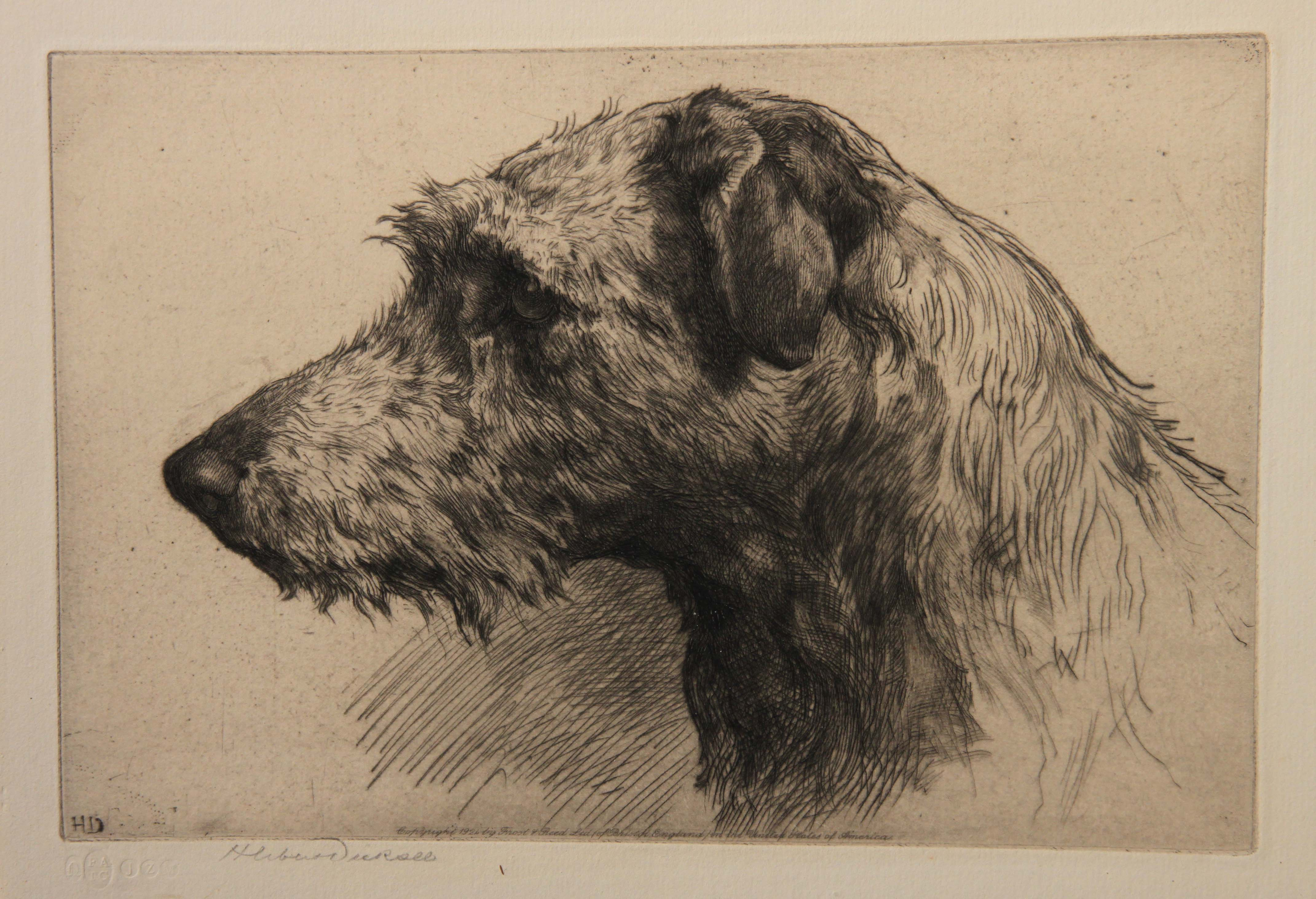 Click for larger image: Scottish Deerhound etching by Herbert Thomas Dicksee signature - Scottish Deerhound etching by Herbert Thomas Dicksee signature