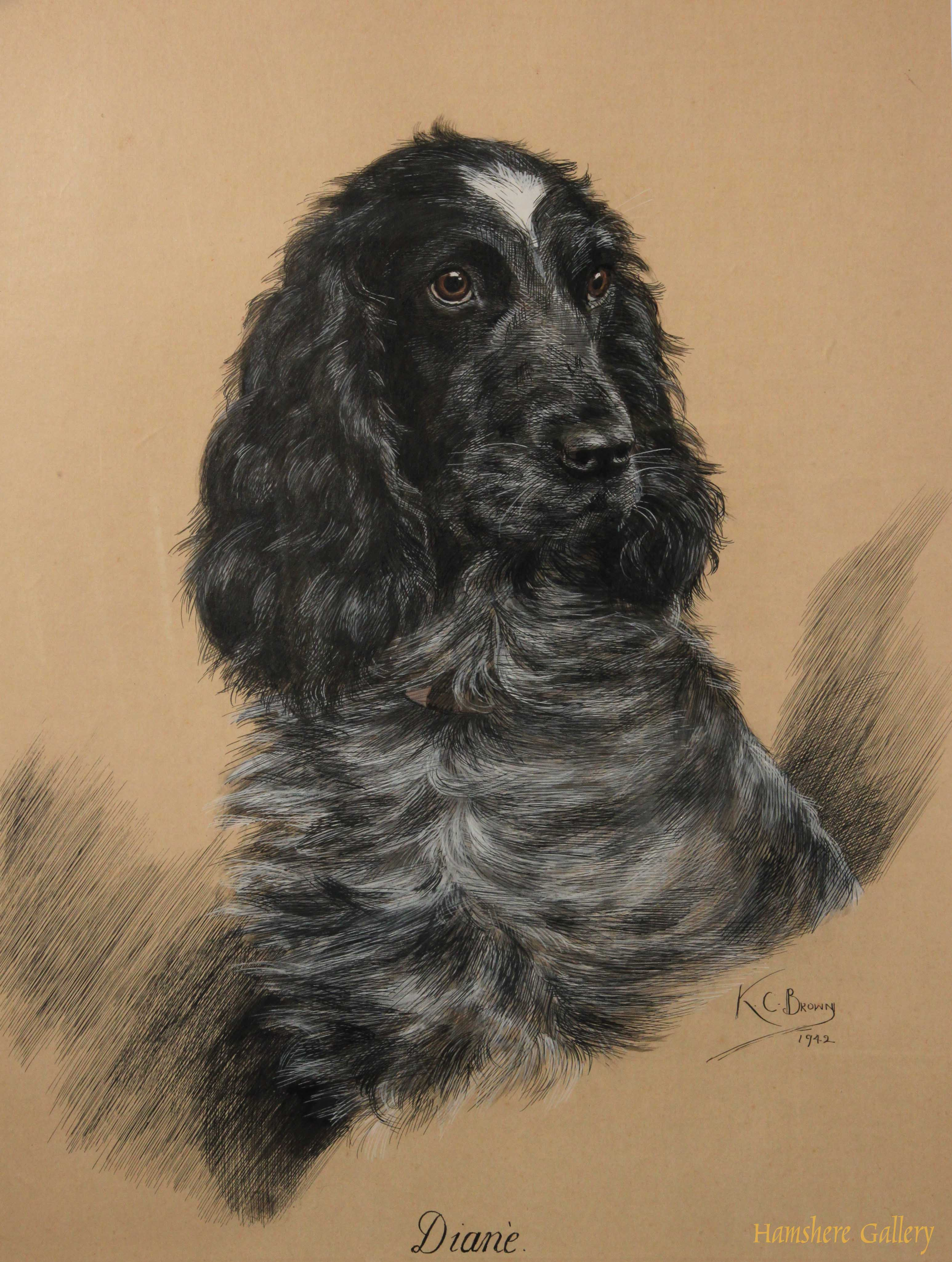 Click to see full size: Cocker Spaniel drawing by Katherine C Brown