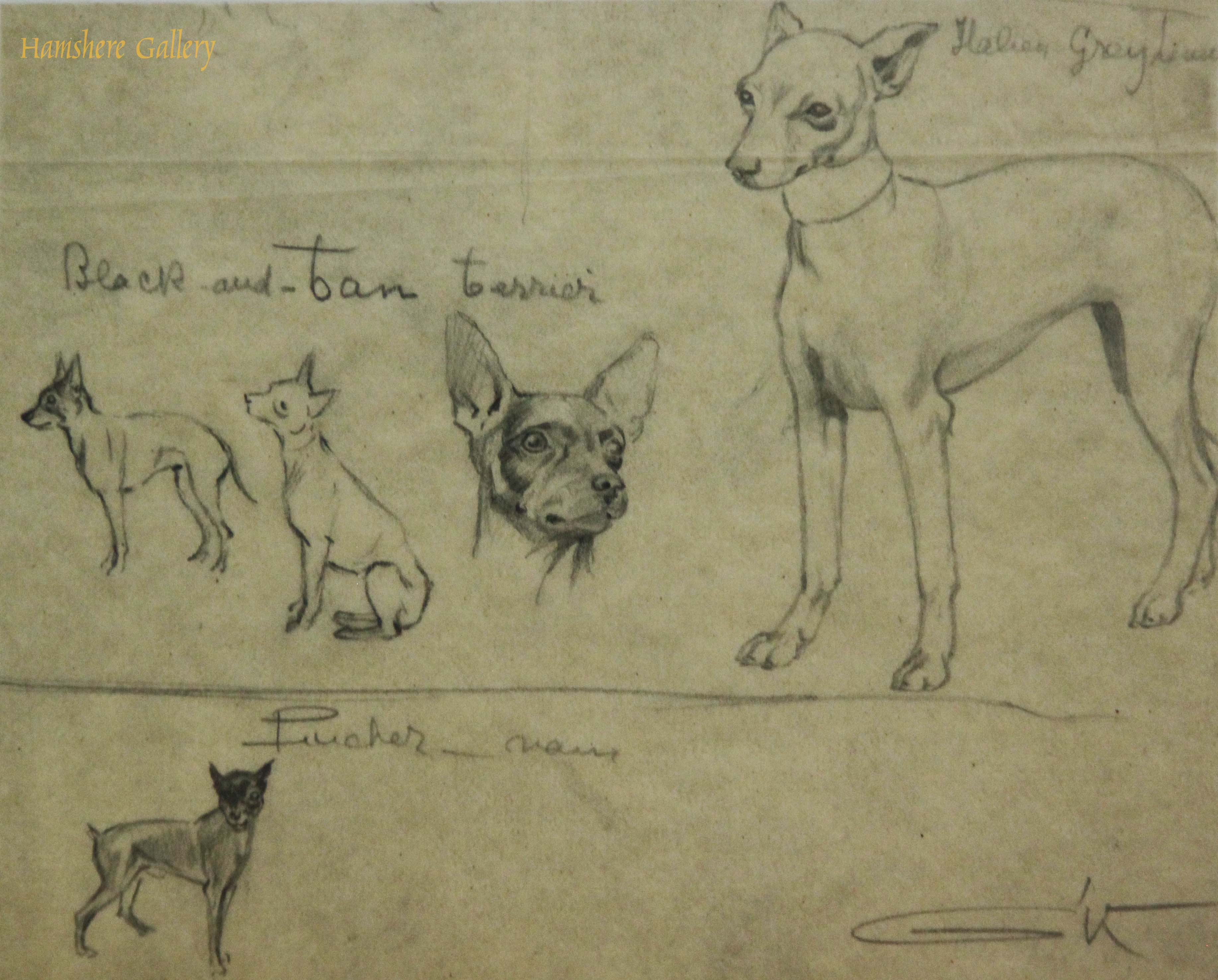 Click for larger image: Pencil studies of the Manchester Terrier / Pinscher / Italian Greyhound by Borris O�Klein / Jean Herblet  - Pencil studies of the Manchester Terrier / Pinscher / Italian Greyhound by Borris O�Klein / Jean Herblet
