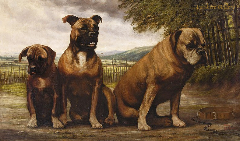 Click to see full size: Boxer dogs by Lord Edward Joseph