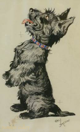 Click to see full size: Scottish Terrier drawing by Cecil Charles Windsor Aldin