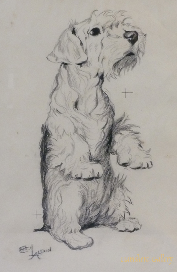 Click to see full size: Sealyham Terrier drawing by Cecil Charles Windsor Aldin