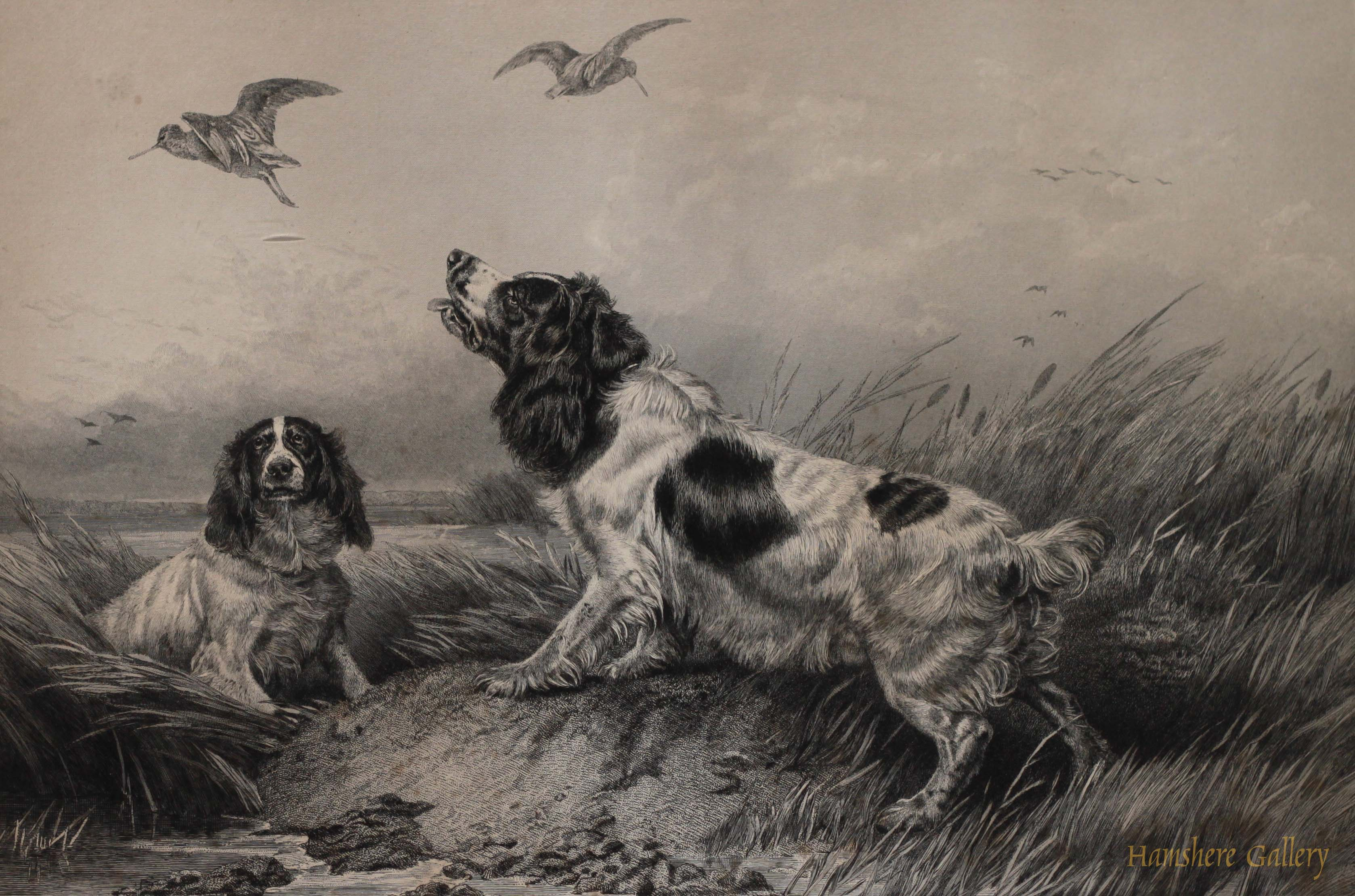 Click to see full size: Engraving of Spaniels setting Woodcock by John Cother Webb