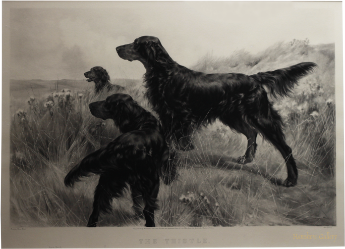 Click to see full size: Gordon Setter �The Thistle� photogravure after Thomas Blinks
