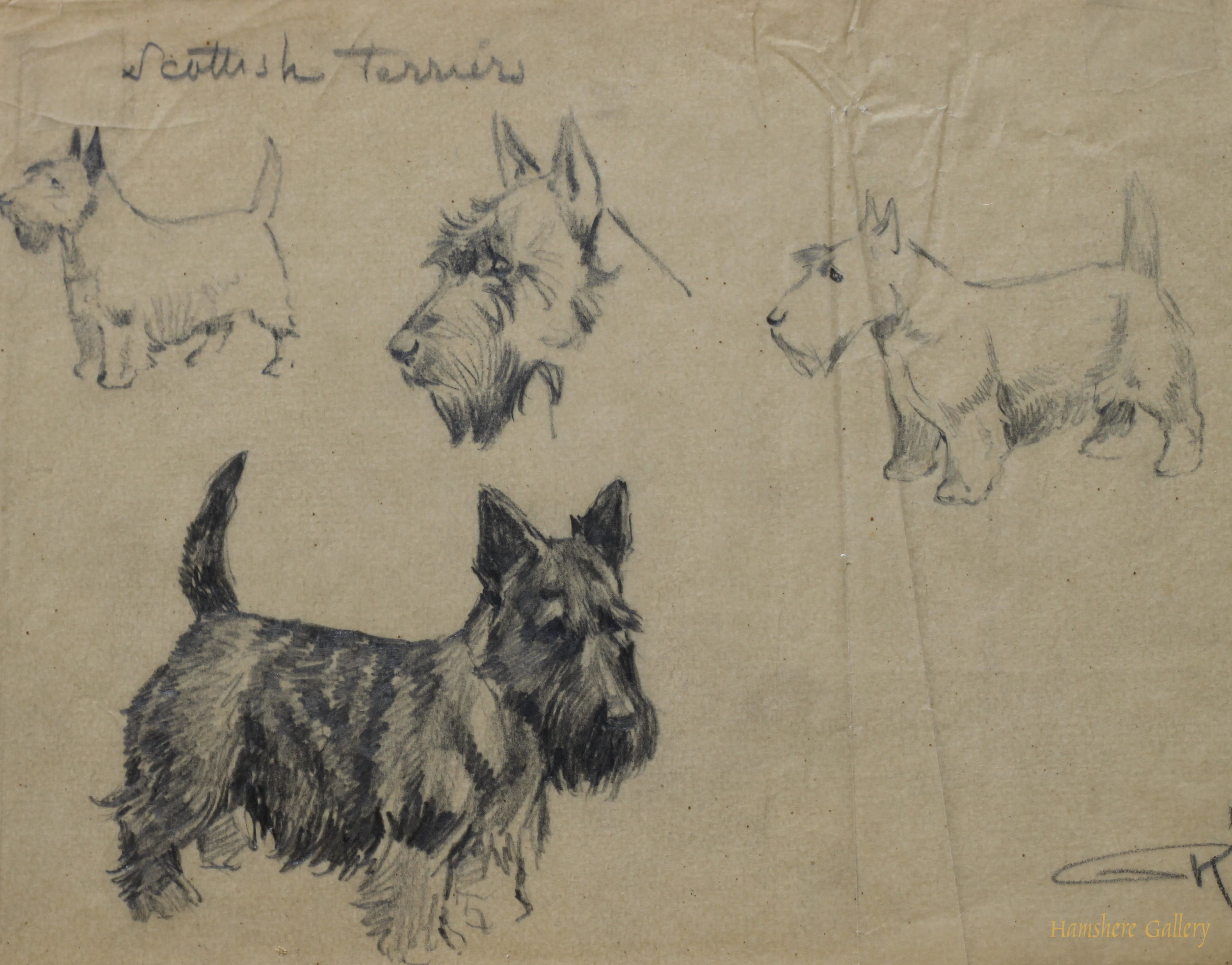 Click to see full size: Scottish Terrier pencil studies by Borris O�Klein / Jean Herblet