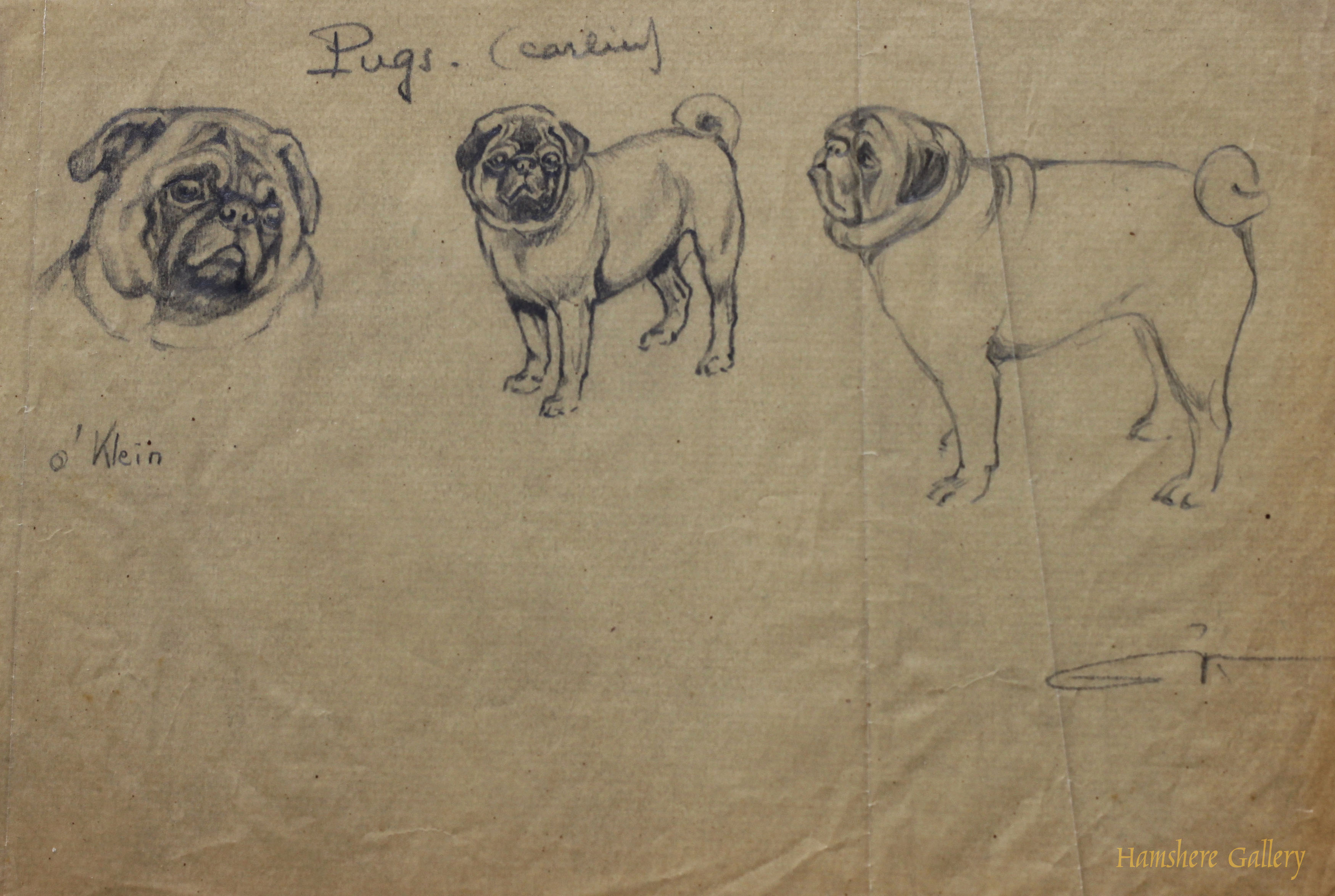 Click to see full size: Pug / Carlin / Mops pencil studies by Borris O�Klein / Jean Herblet