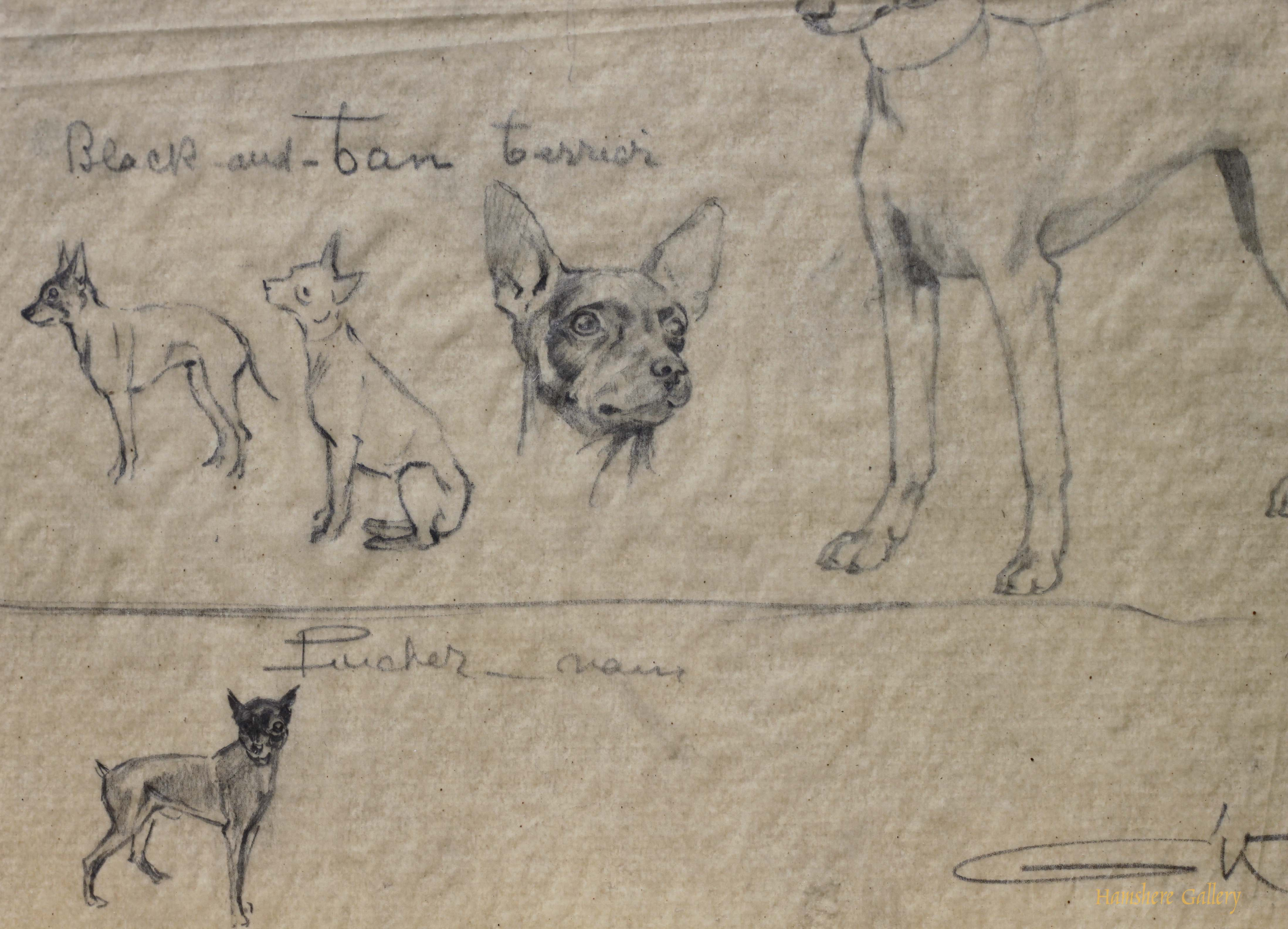 Click to see full size: Manchester Terrier / Pinscher pencil studies by Borris O�Klein / Jean Herblet- Manchester Terrier / Pinscher pencil studies by Borris O�Klein / Jean Herblet
