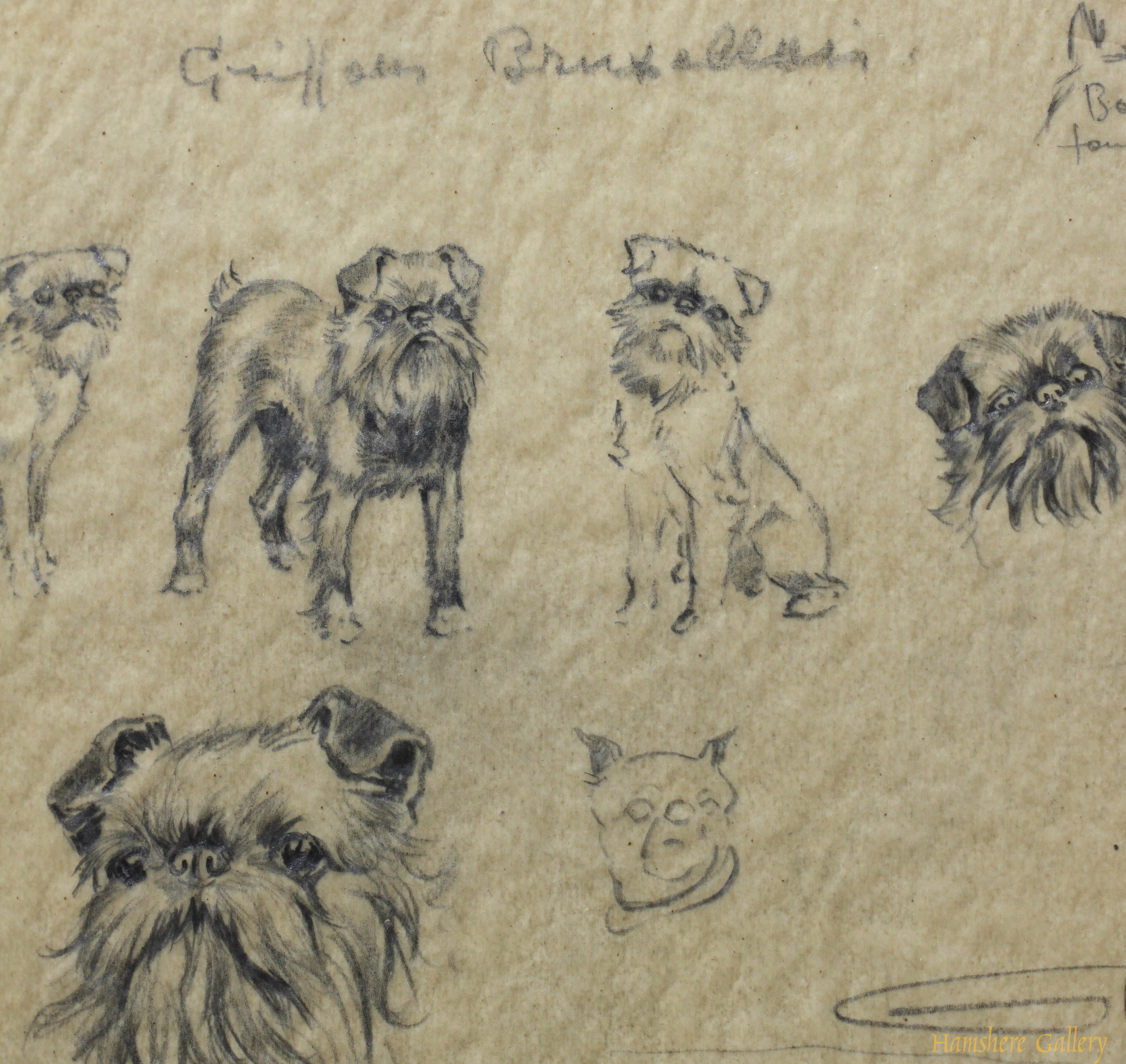 Click for larger image: Griffon Bruxellois pencil studies by Borris O�Klein / Jean Herblet - Griffon Bruxellois pencil studies by Borris O�Klein / Jean Herblet