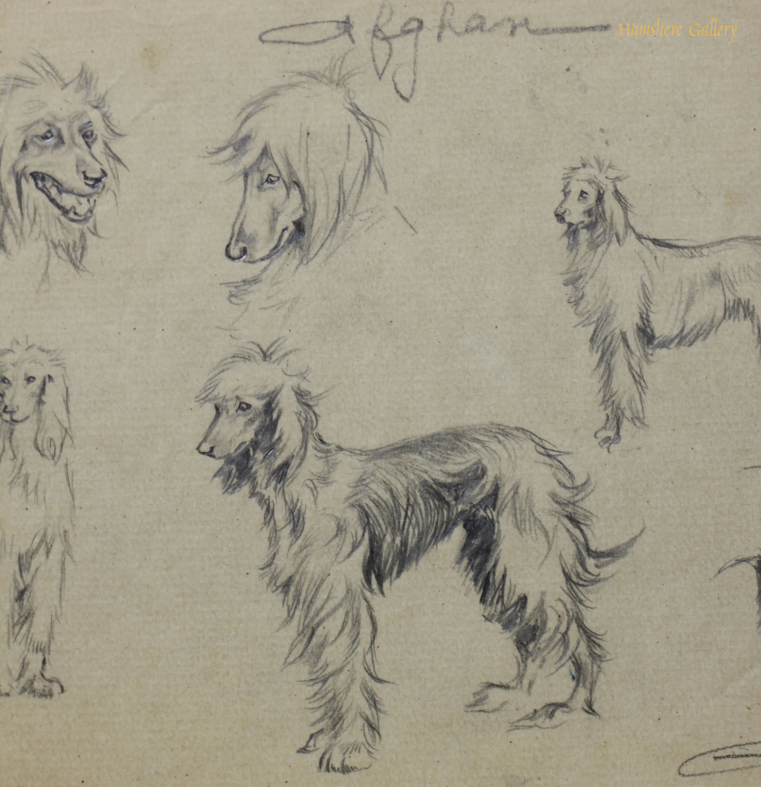 Click for larger image: Afghan Hound pencil studies by Borris O�Klein / Jean Herblet  - Afghan Hound pencil studies by Borris O�Klein / Jean Herblet