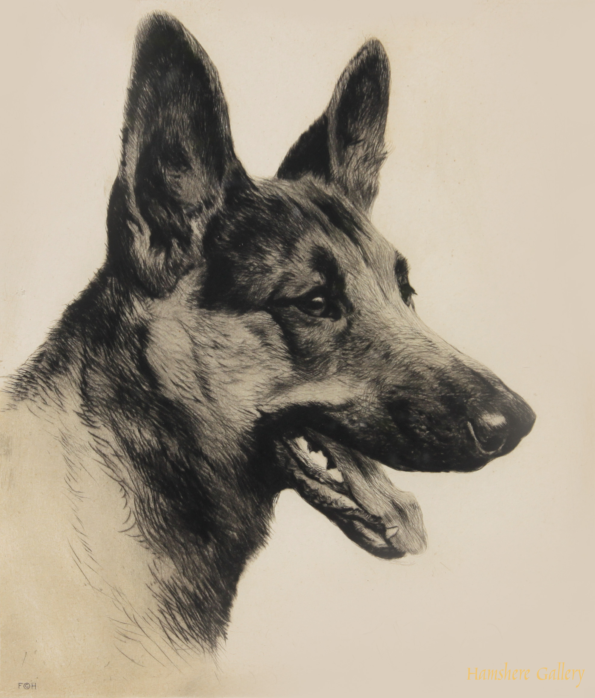 Click to see full size: German Shepherd by Kurt Meyer Eberhardt