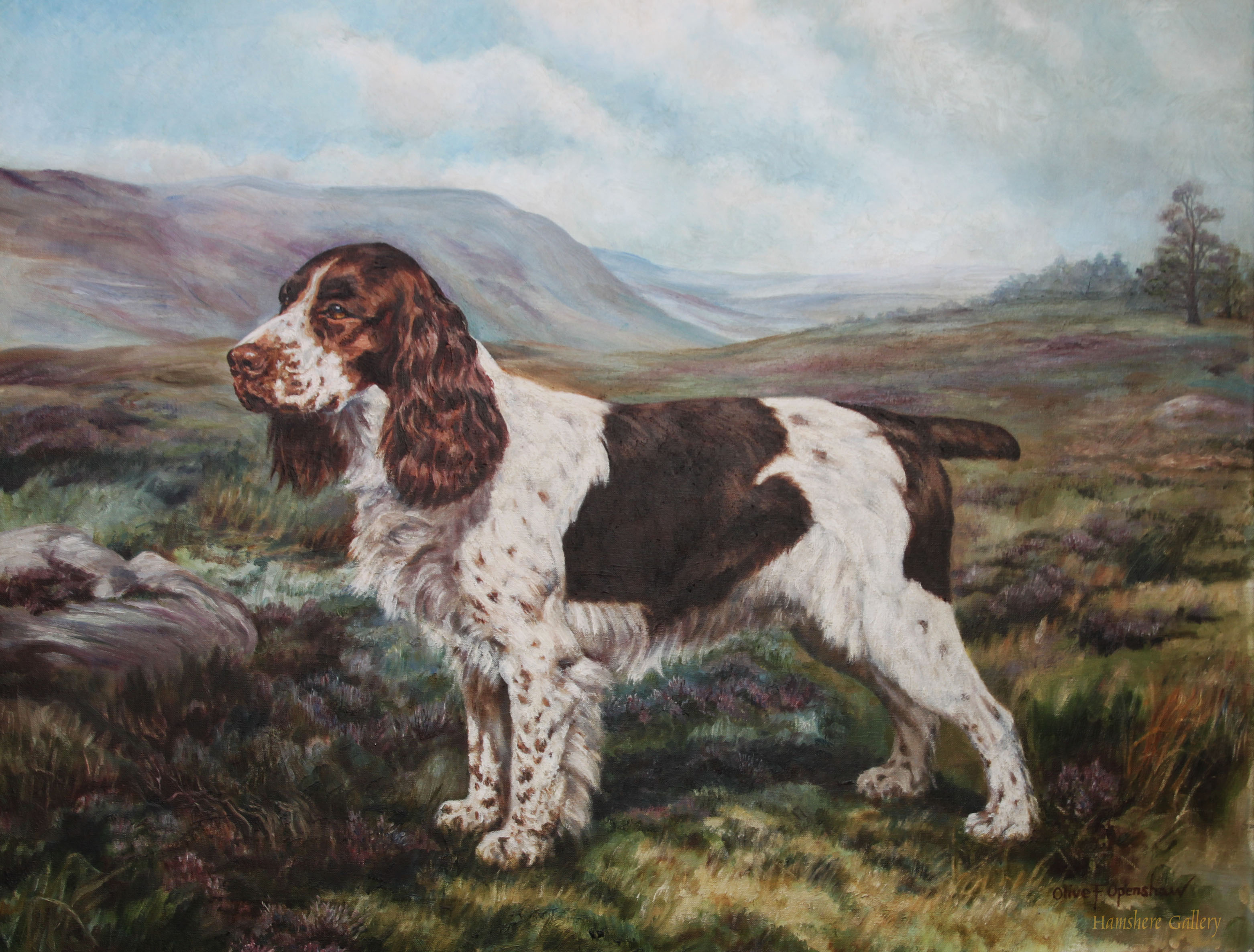 Click to see full size: An oil on canvas of a Springer Spaniel by Miss Olive F Openshaw ACRA, DA