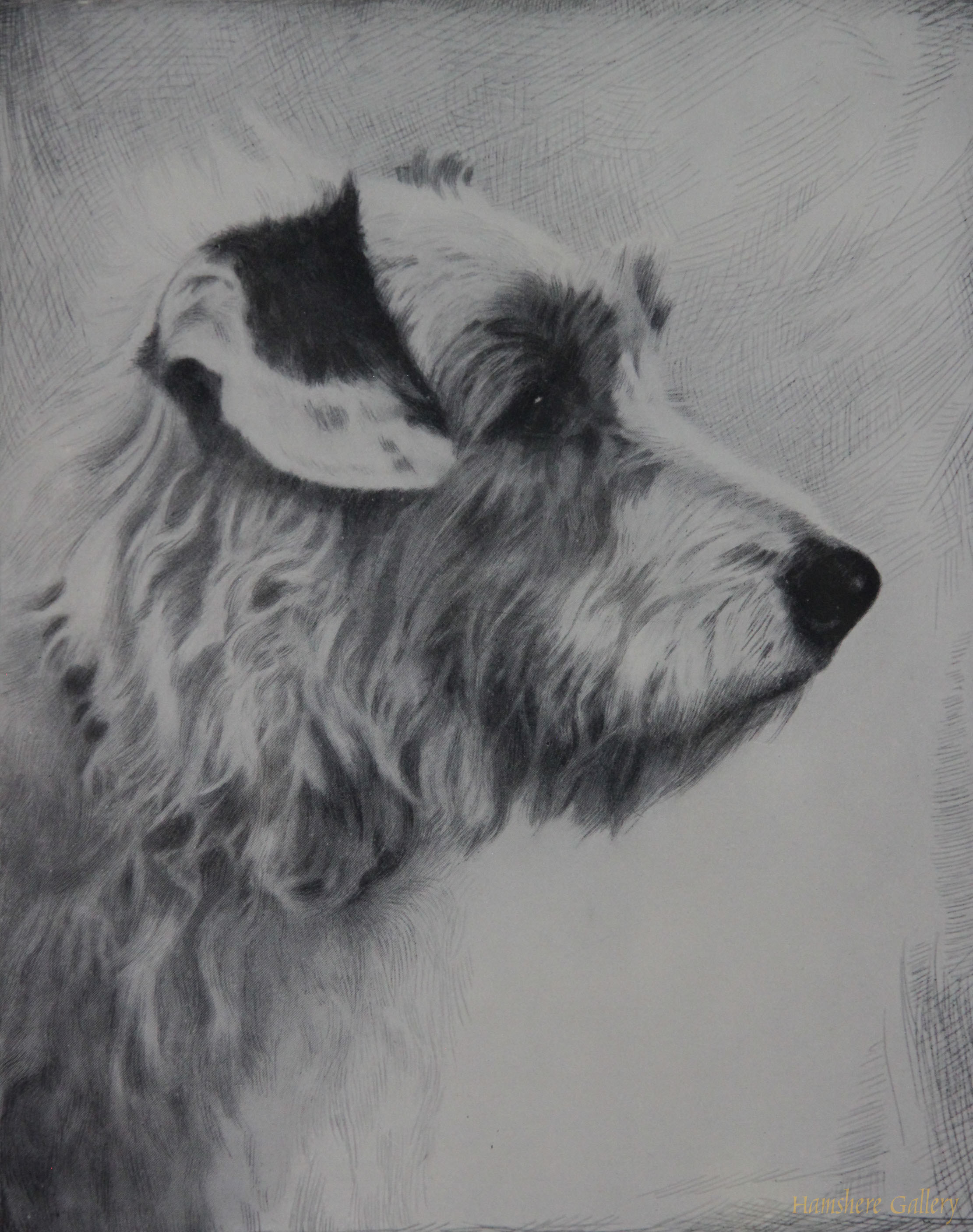 Click to see full size: A lithograph of a Sealyham Terrier by Malcolm Nicholson