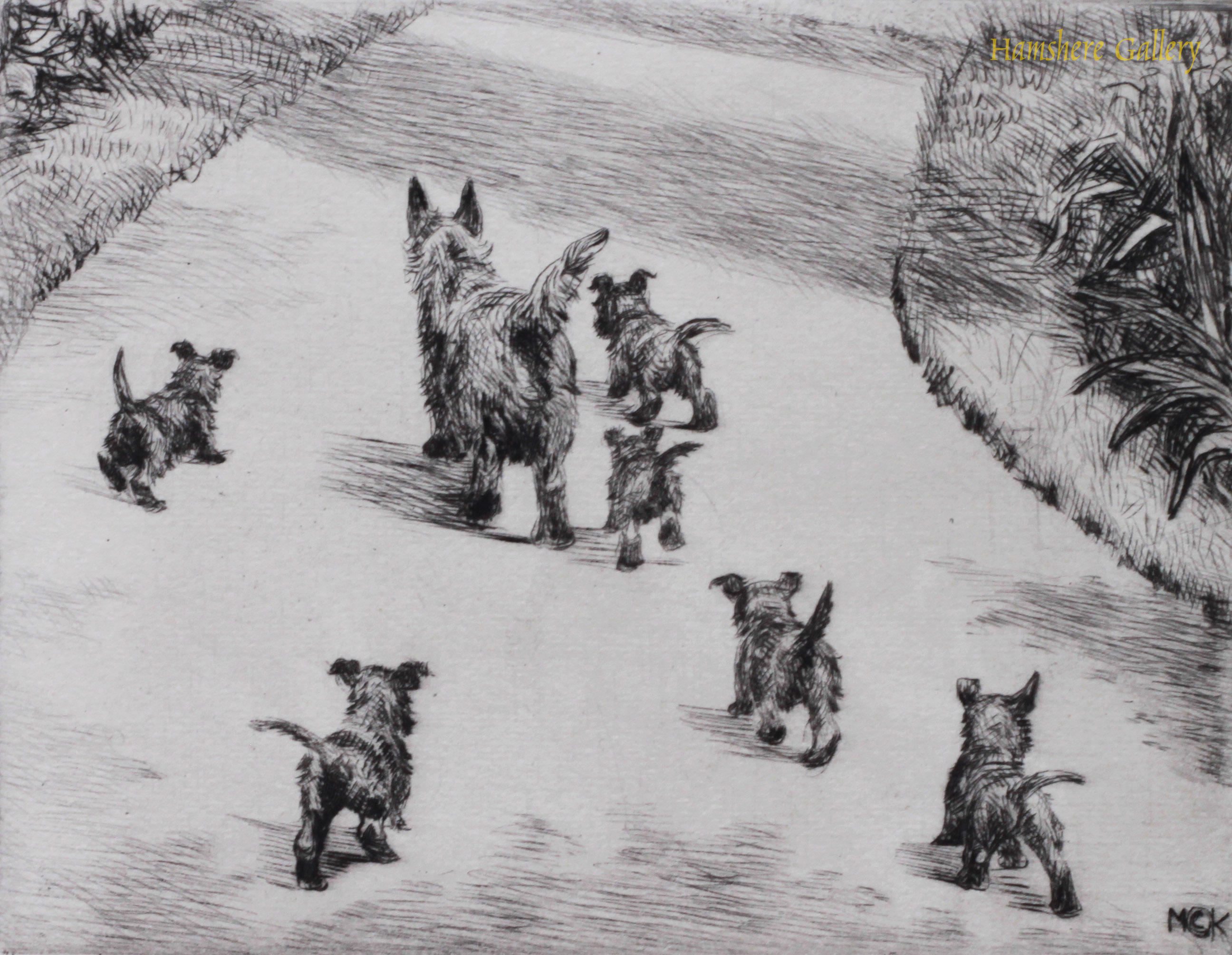Click to see full size: Scottish Terrier dry-point etching Innocents Abroadby Marguerite Kirmse