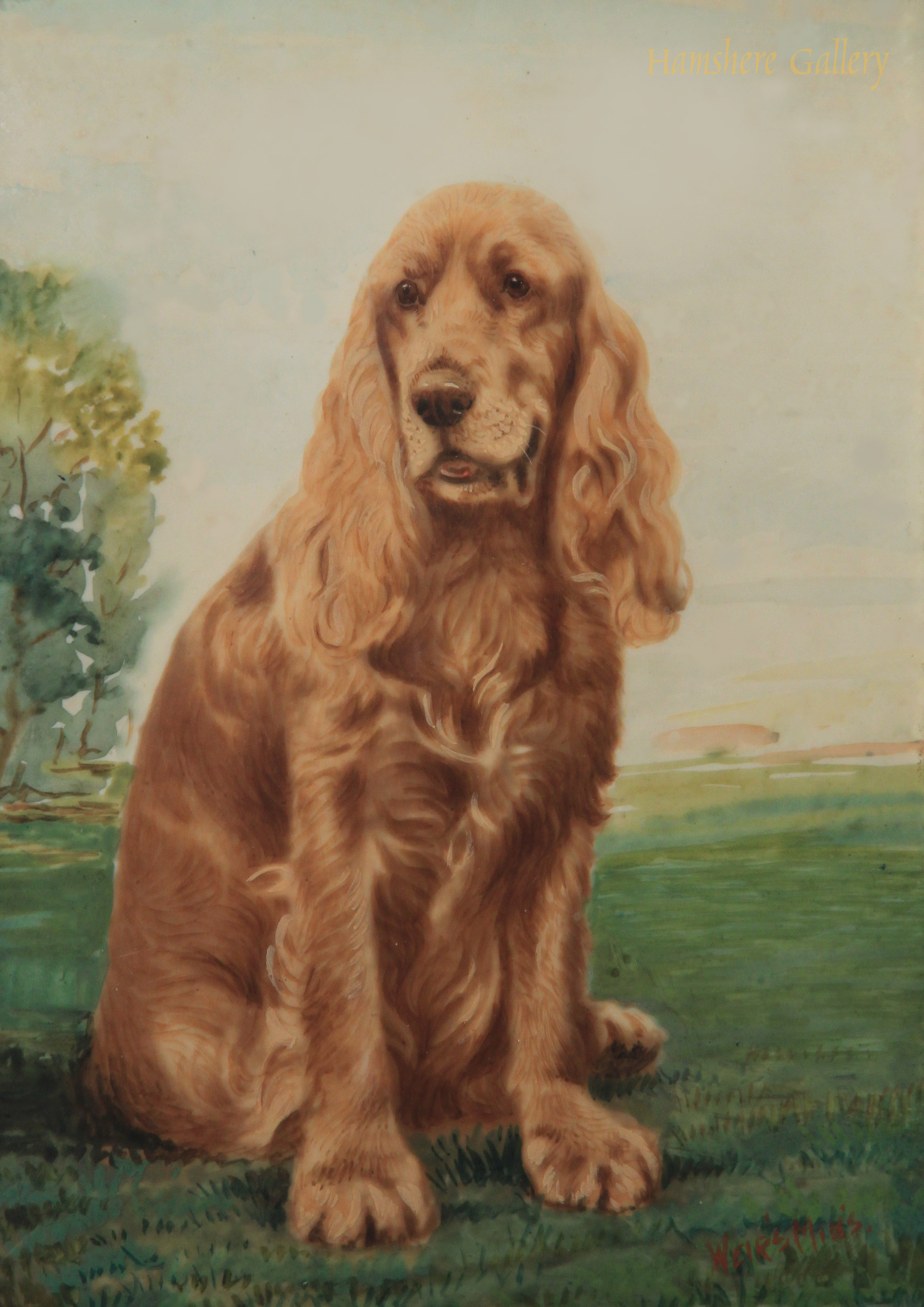 Click to see full size: seated Cocker Spaniel by Michael Weirs