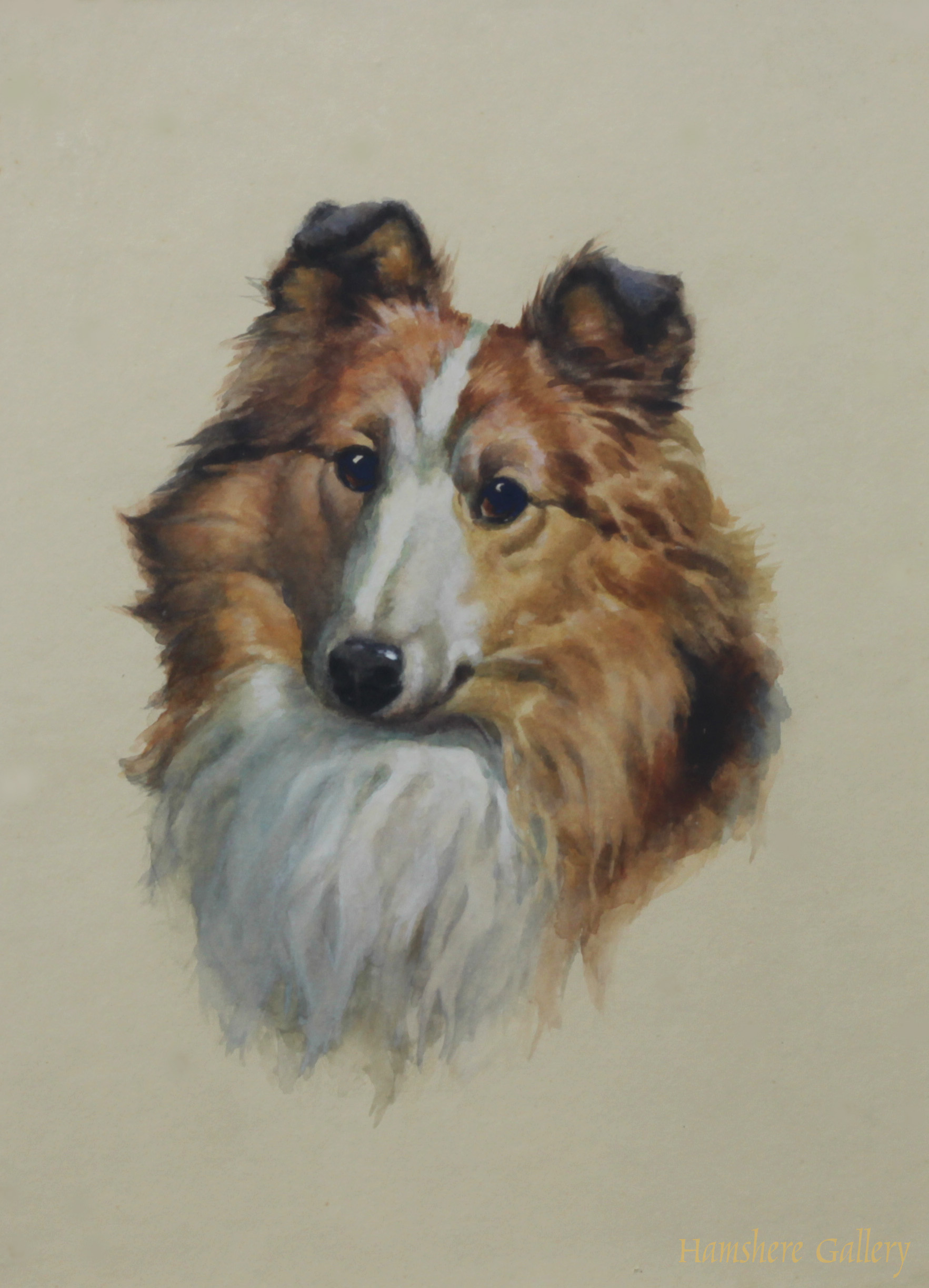Click to see full size: Watercolour of a Shetland Collie Sheltie by Evelyn Lina Linton