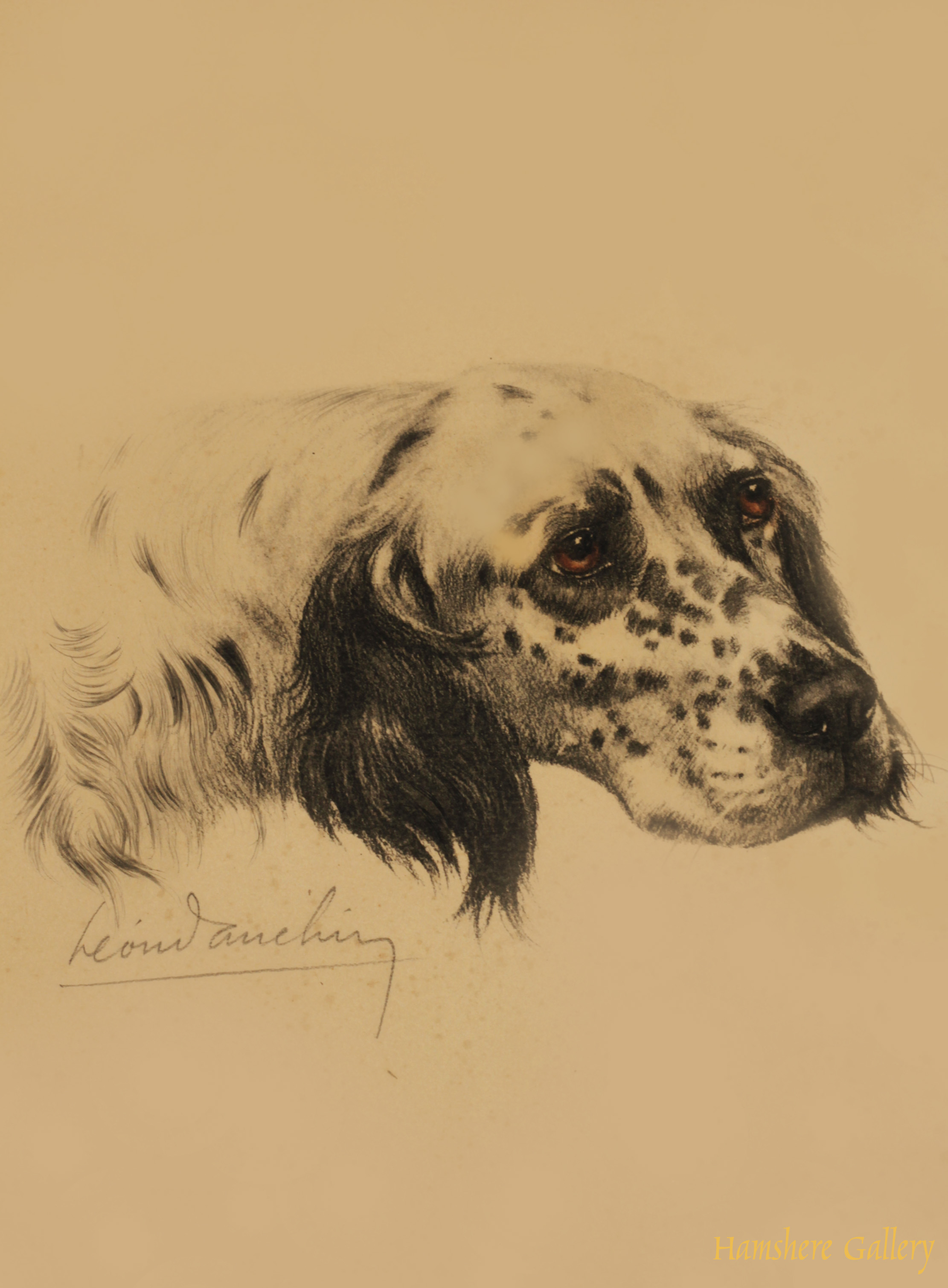Click to see full size: English Setter etching by Leon Danchin (French, 1887-1939)