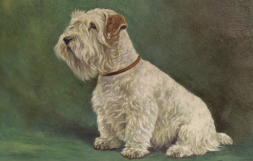 Click to see full size: Oil on board of a seated Sealyham by Miss Maud Turner