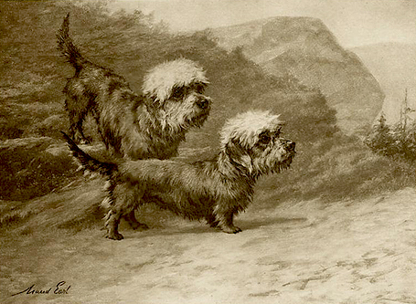 Click to see full size: Dandie Dinmont photogravure after Maud Earl