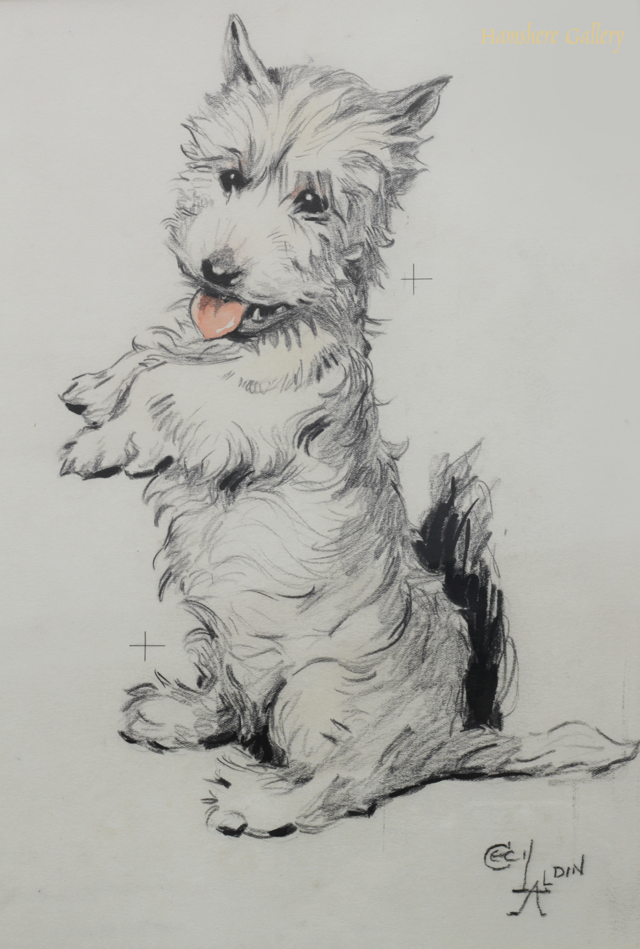 Click to see full size: West Highland Terrier drawing by Cecil Charles Windsor Aldin