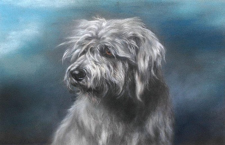 Click to see full size: The Drop-Ear Skye Terrier Major by Marion Rodger Harvey