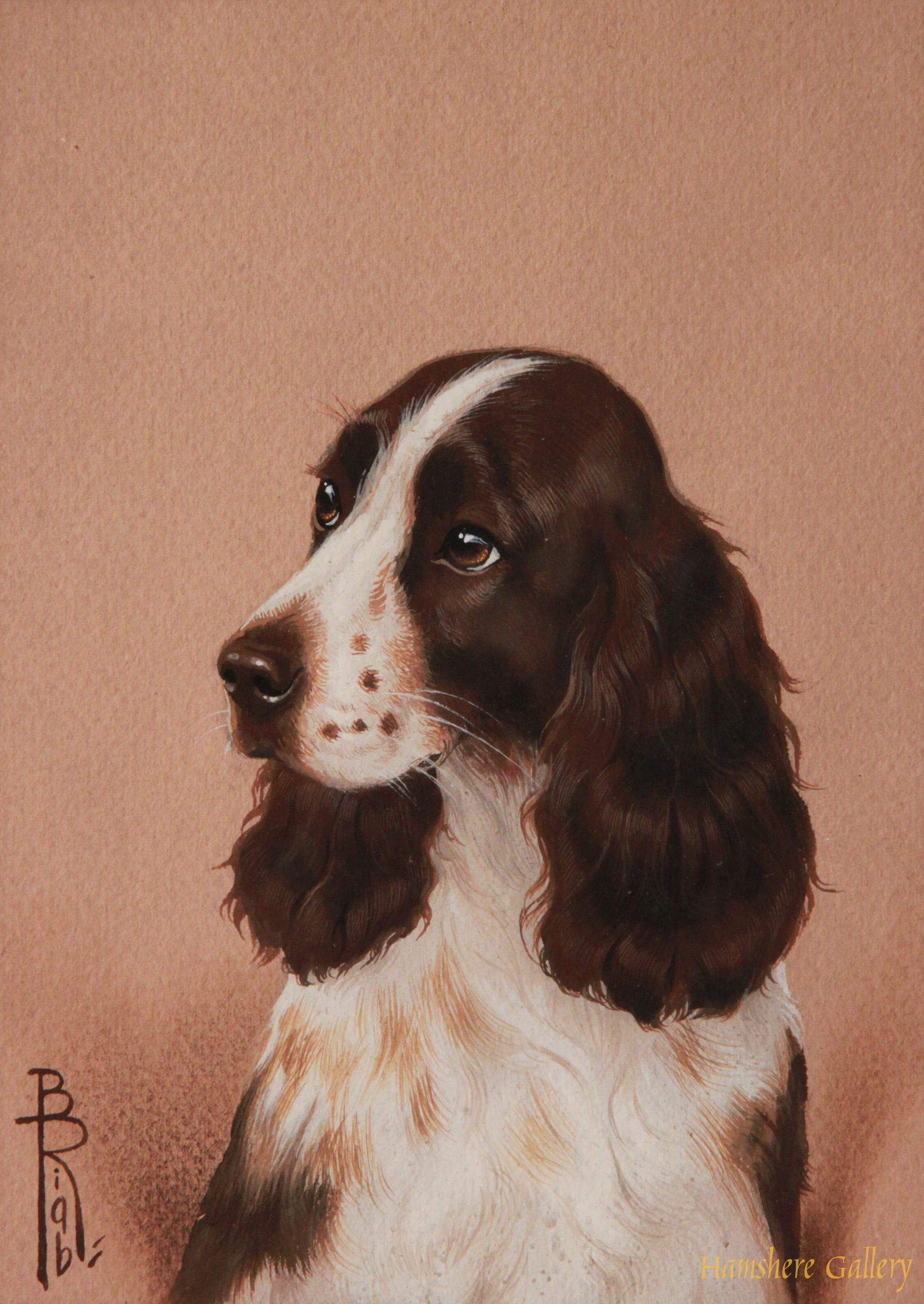 Click to see full size: Miniature in watercolour of a Cocker Spaniel by Boris Stefanovitch Riabouchinsky
