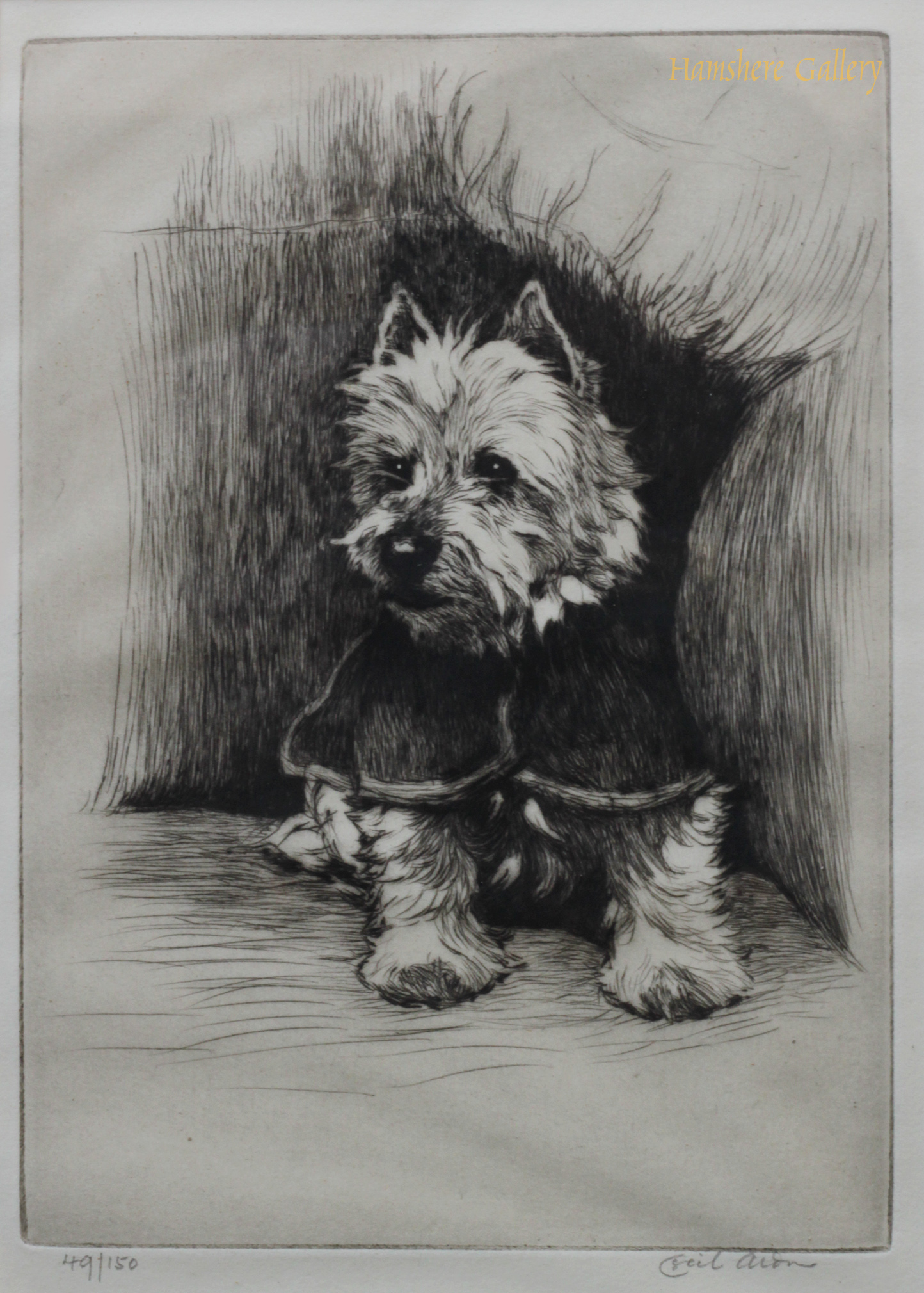 Click to see full size: West Highland Terrier etching by Cecil Charles Windsor Aldin