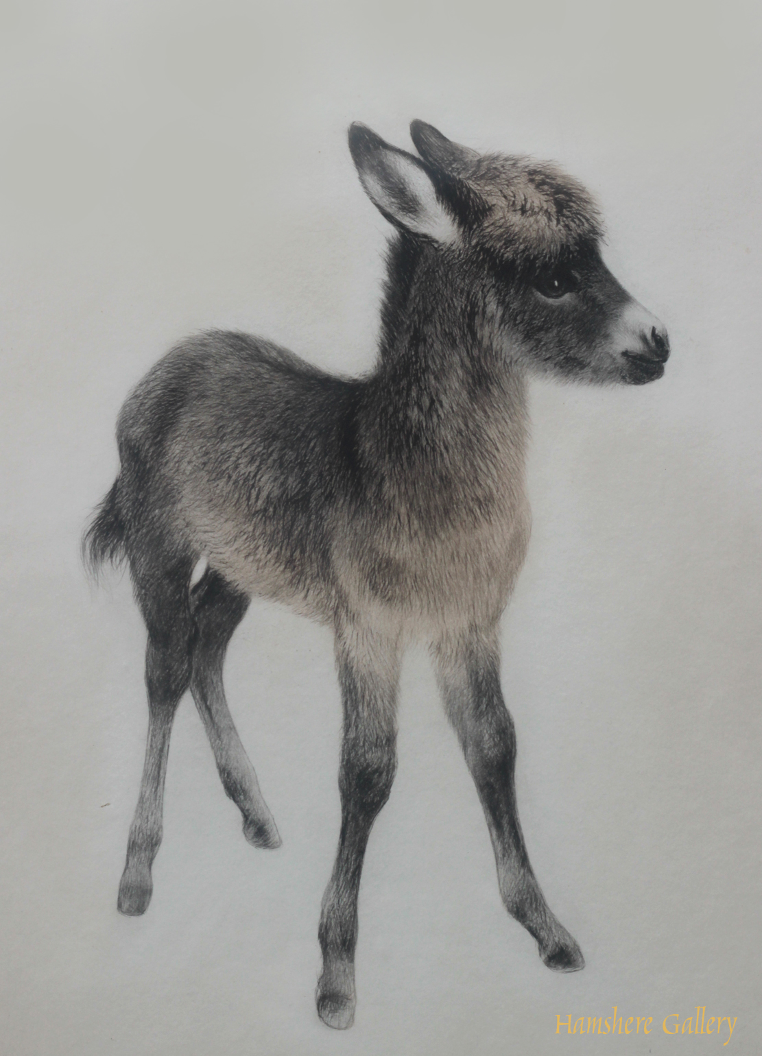 Click to see full size: Young donkey aquatint dry-point etching by Kurt Meyer Eberhardt