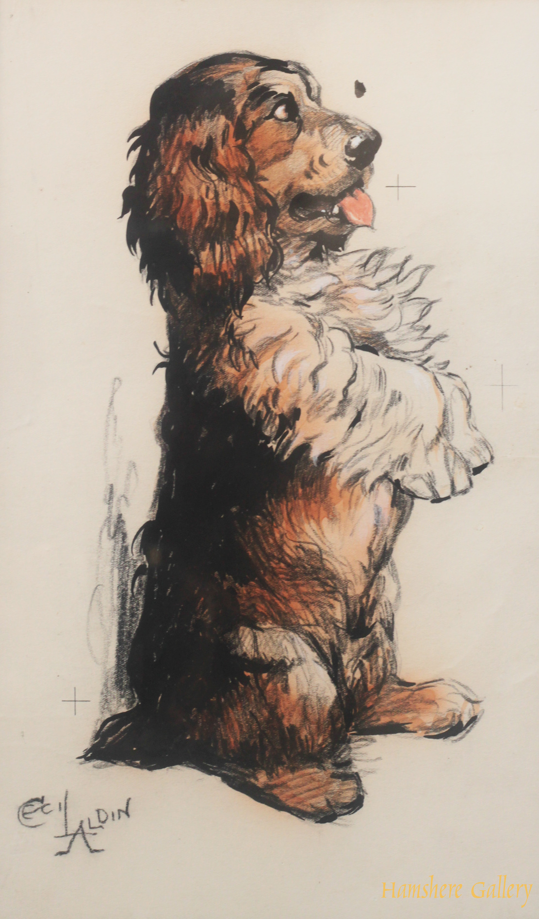Click to see full size: Cocker Spaniel drawing by Cecil Charles Windsor Aldin RBA