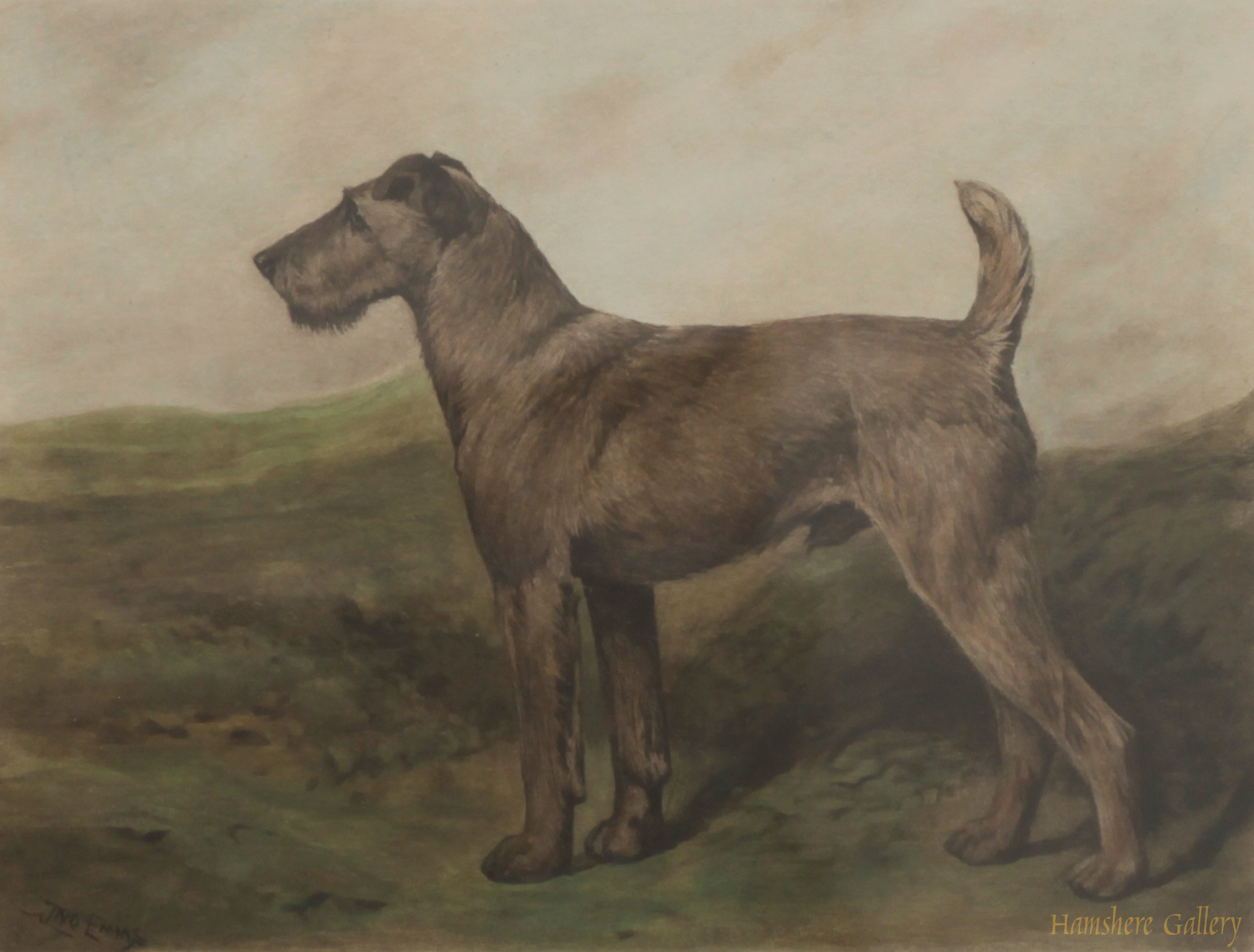 Click to see full size: Coloured lithograph of an Irish Terrier by John Emms