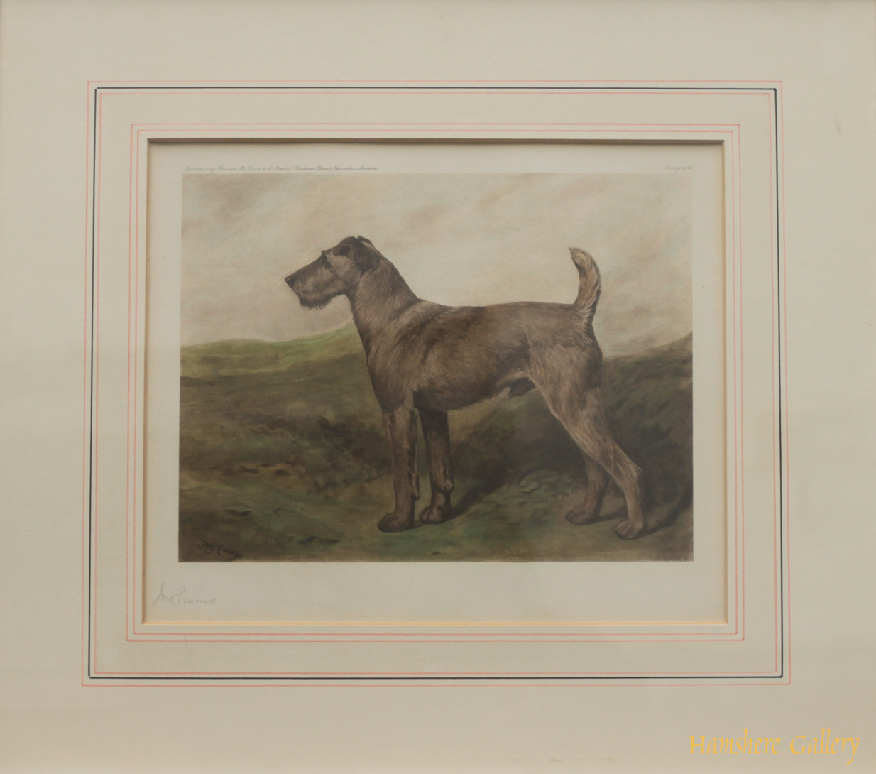 Click for larger image: coloured lithograph of a Irish Terrier  - coloured lithograph of a Irish Terrier