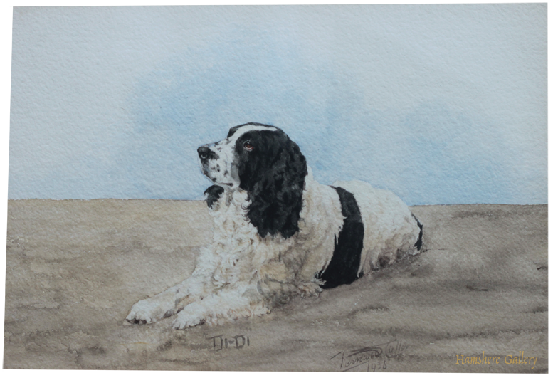 Click to see full size: Springer Spaniel watercolour