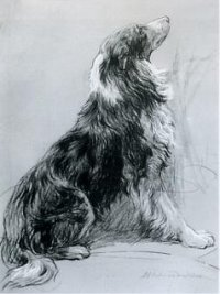 Click to see full size: Rough Collie by Herbert Thomas Dicksee RE