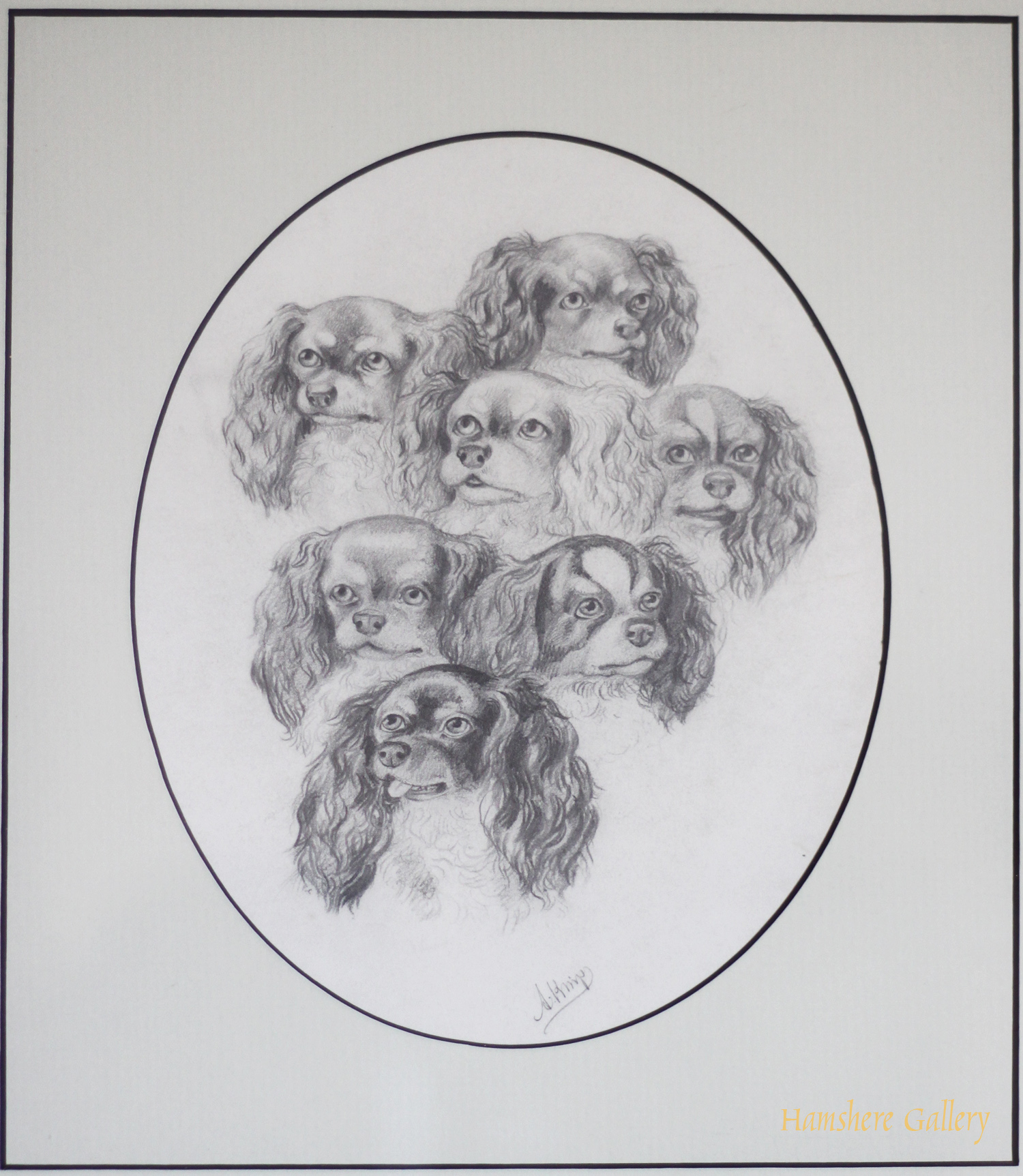 Click for larger image: A graphite drawing of seven King Charles Cavalier Spaniels by August Knip  - A graphite drawing of seven King Charles Cavalier Spaniels by August Knip