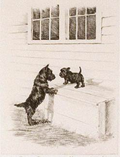 Click to see full size: Scottish Terrier dry-point etching �Up for Inspection� by Marguerite Kirmse