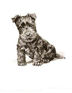 Click to see full size: Scottish Terrier dry-point etching �Watch Me Grow� by Marguerite Kirmse