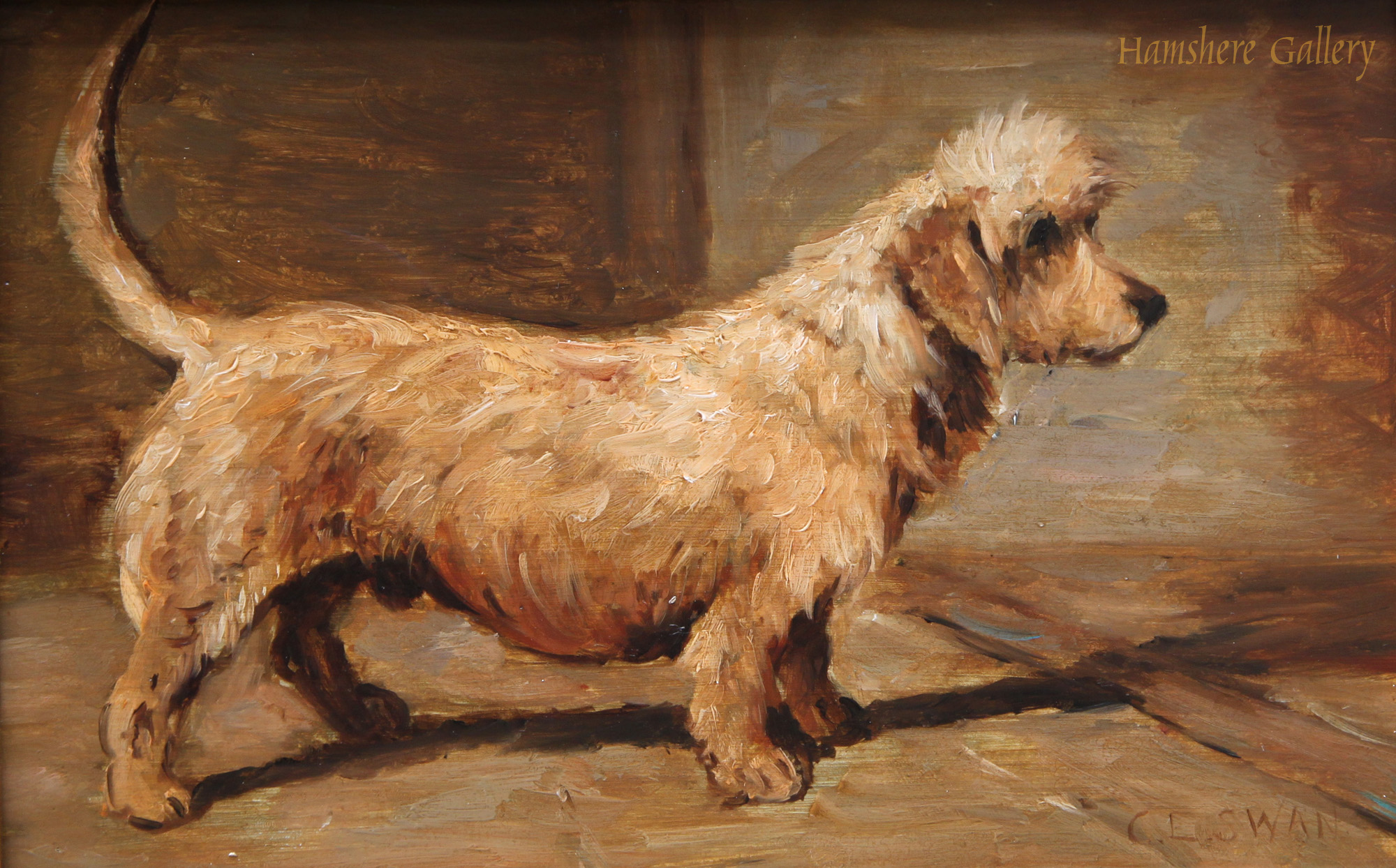 Click to see full size: Oil of a Dandie Dinmont by Cuthbert Edmund Swan