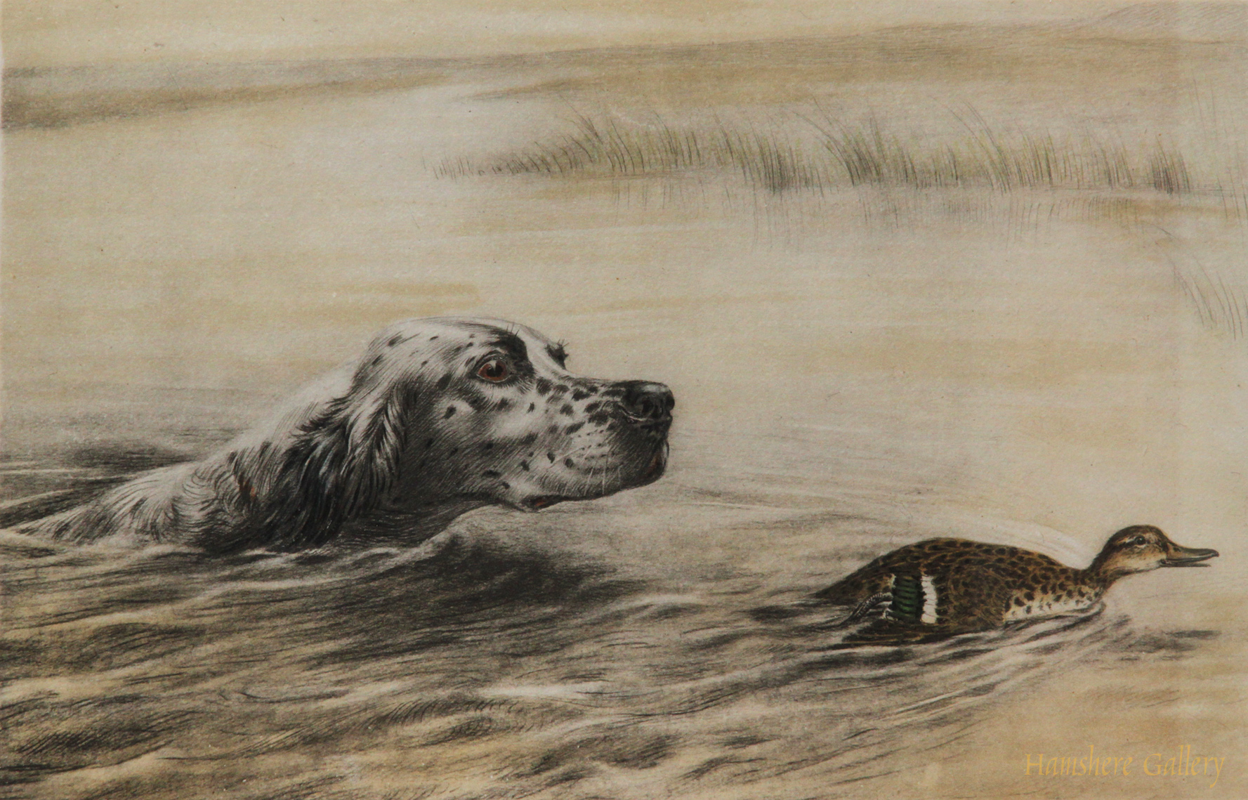 Click to see full size: English Setter chasing an Eider etching by Leon Danchin