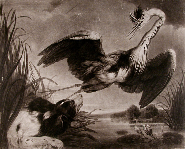 Click to see full size: Mezzotint of Spaniel / Setter and Heron by Samuel William Reynolds (English, 1773 � 13 August 1835) after James Northcote RA