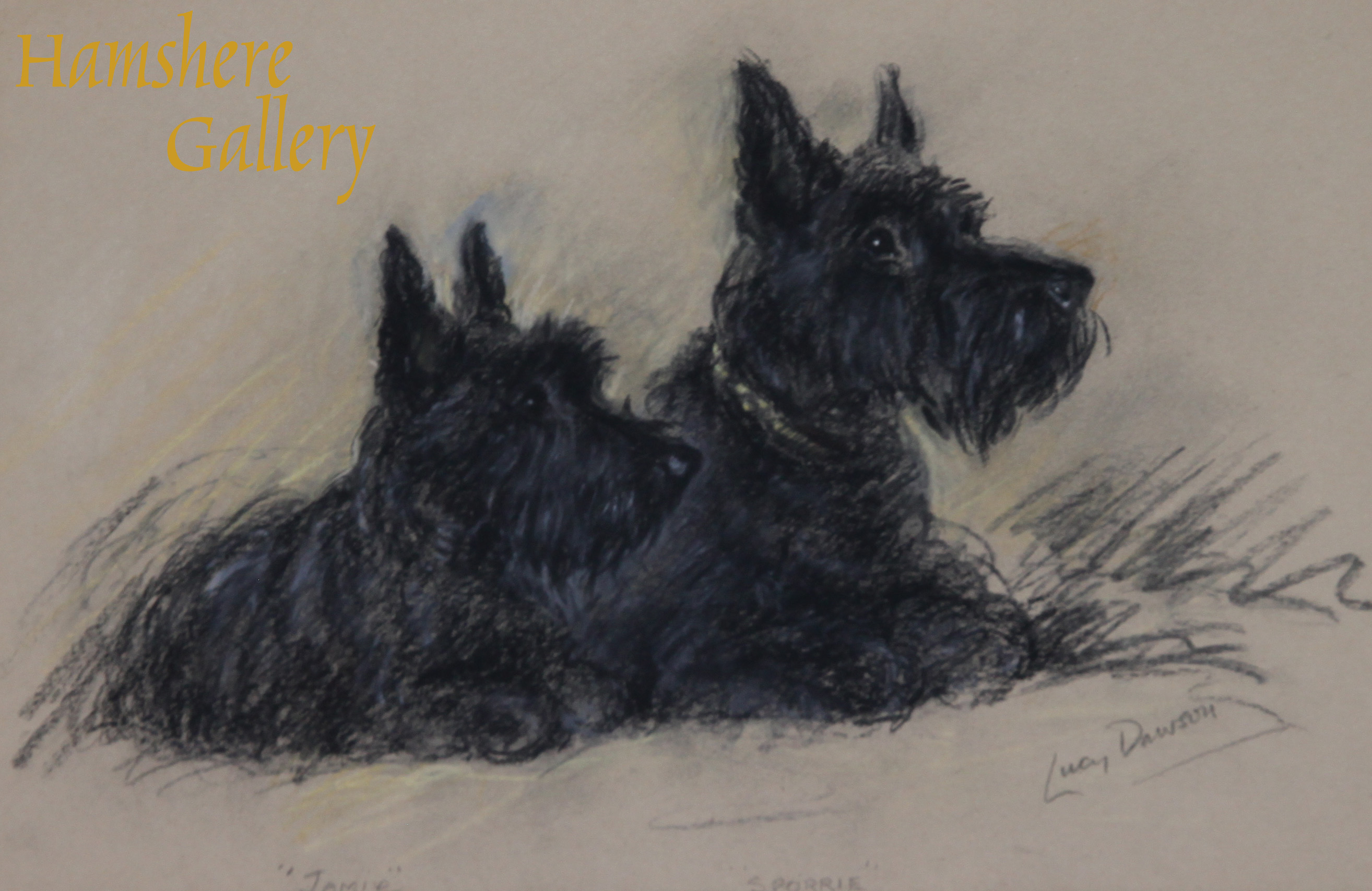 Click to see full size: A Scottish Terrier pastel of �Jamie� and �Sporrie� by Lucy Dawson