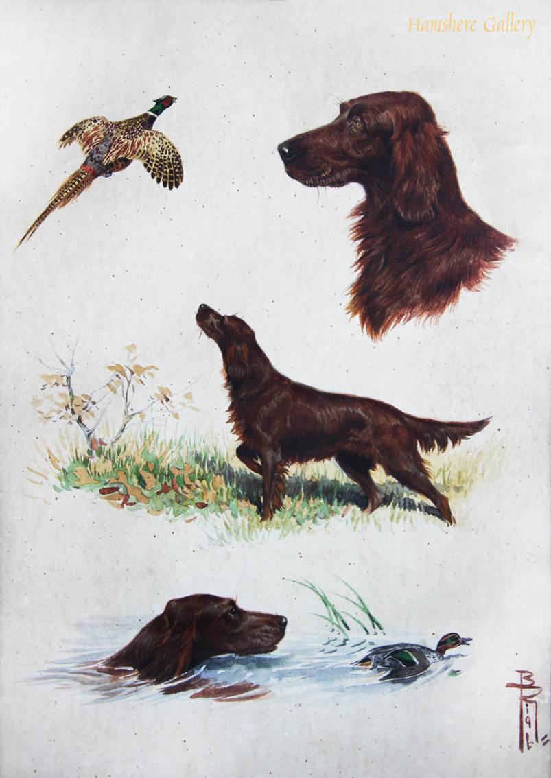 Click to see full size: Watercolour studies of the Irish Setter by Boris Stefanovitch Riabouchinsky