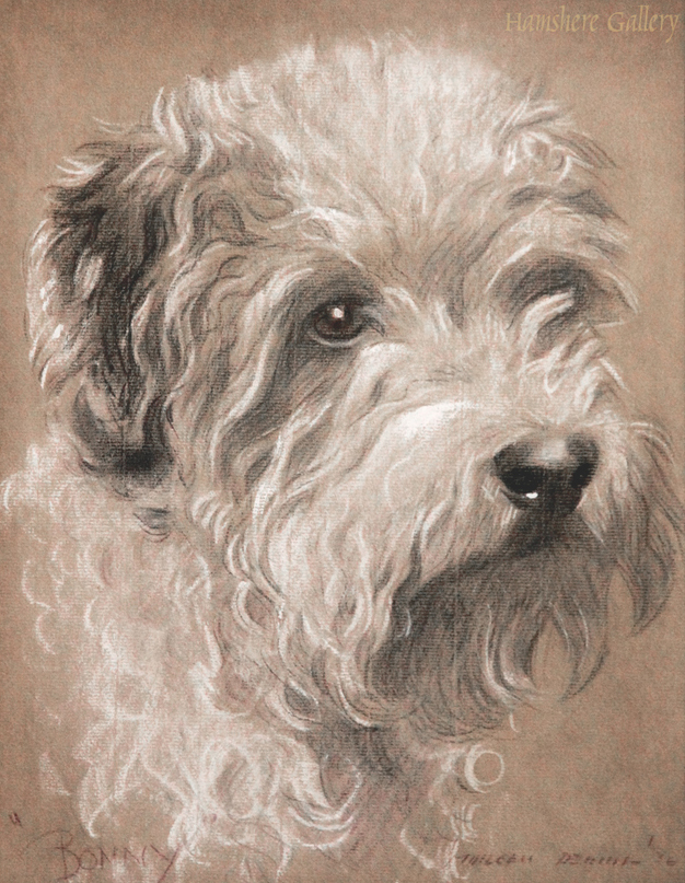 Click to see full size: The Dandie Dinmont �Bonny� drawing by Morgan Dennis (American, 1892-1960)