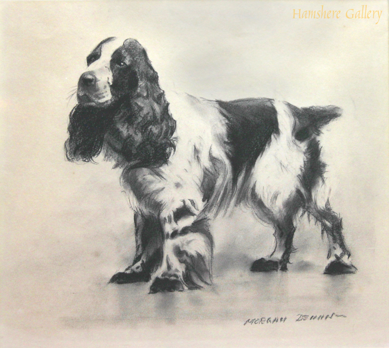 Click to see full size: Cocker Spaniel drawing by Morgan Dennis (American, 1892-1960)