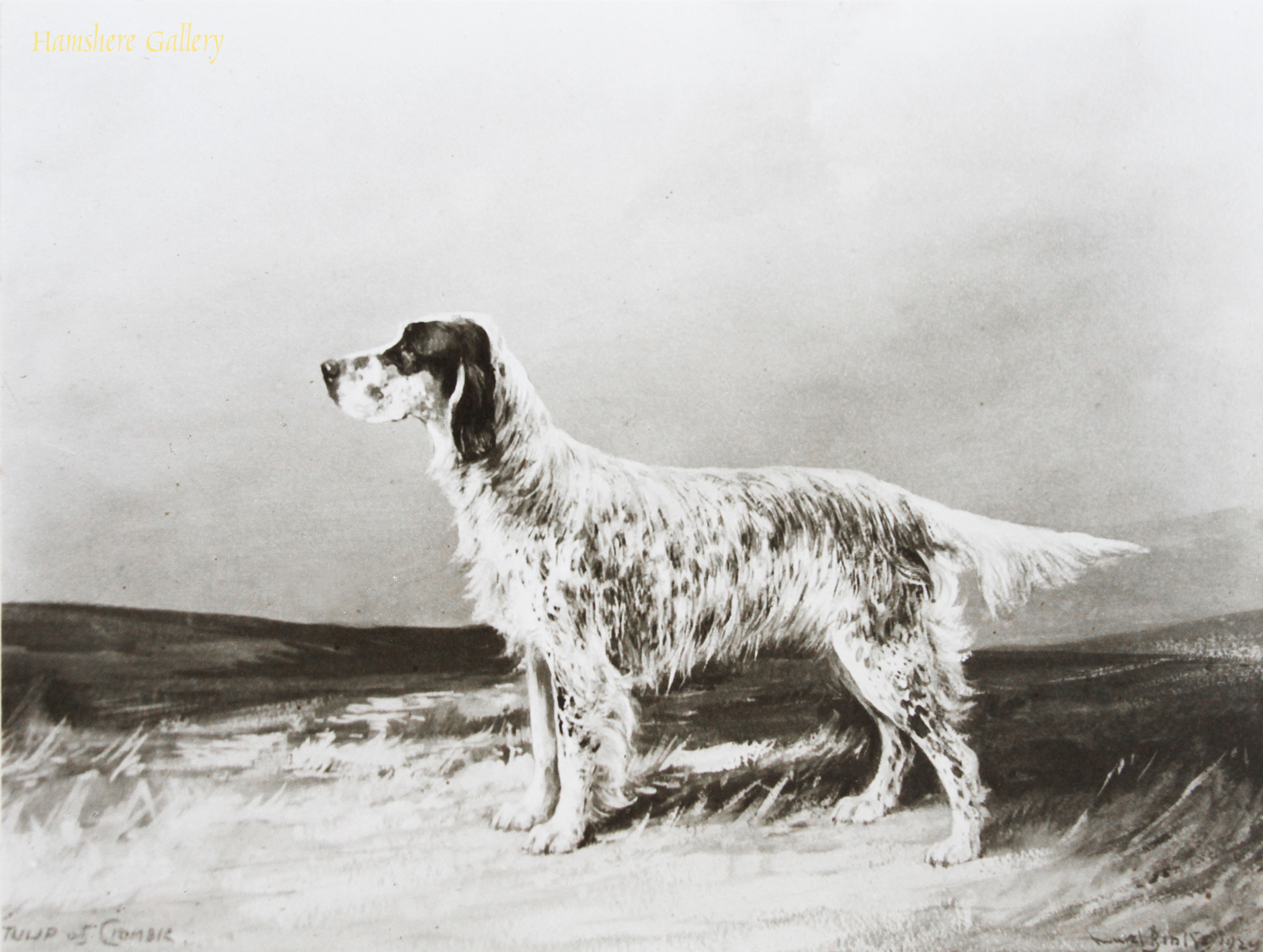 Click to see full size: Photograph of the English Setter after the painting by Reuben Ward Binks (English, 1880-1950)