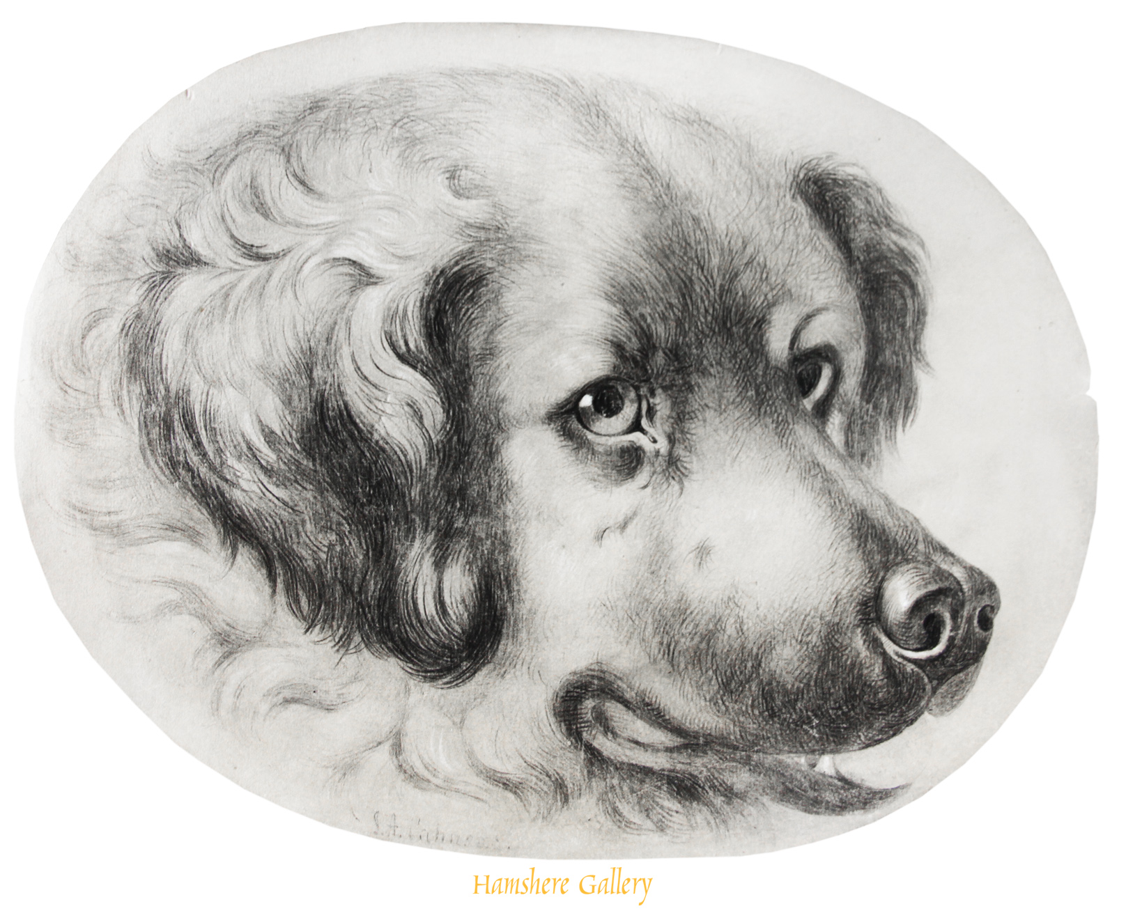 Click to see full size: An oval pencil study of a St Bernard, signed, English, circa 1850.