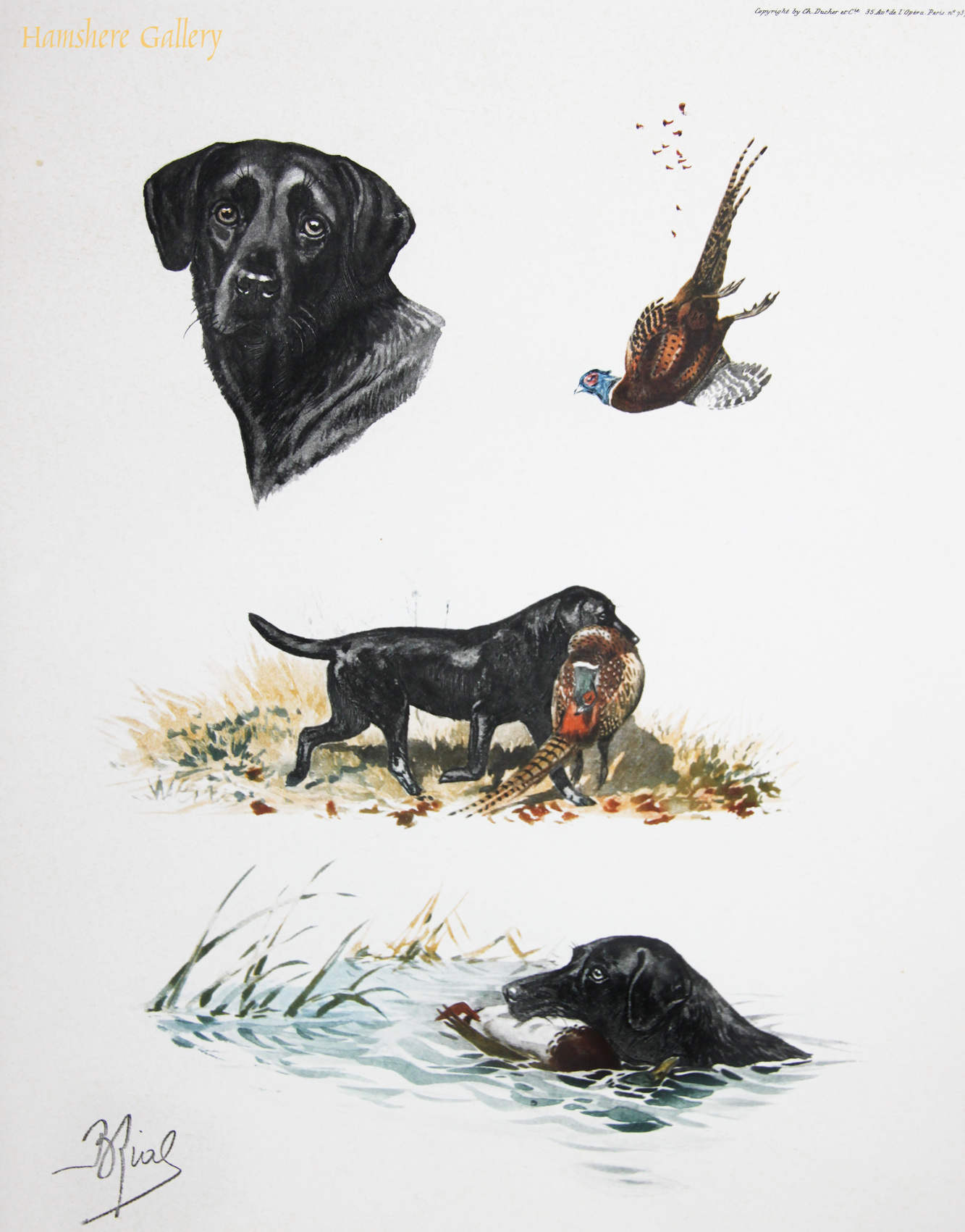 Click to see full size: Etching of Labrador studies by Boris Stefanovitch (French, 1898-1975)