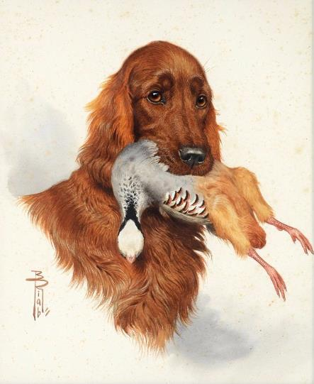 Click to see full size: Watercolour of an Irish Setter with Garganey Teal duck by Boris Stefanovitch Riabouchinsky (French, 1898-1975).